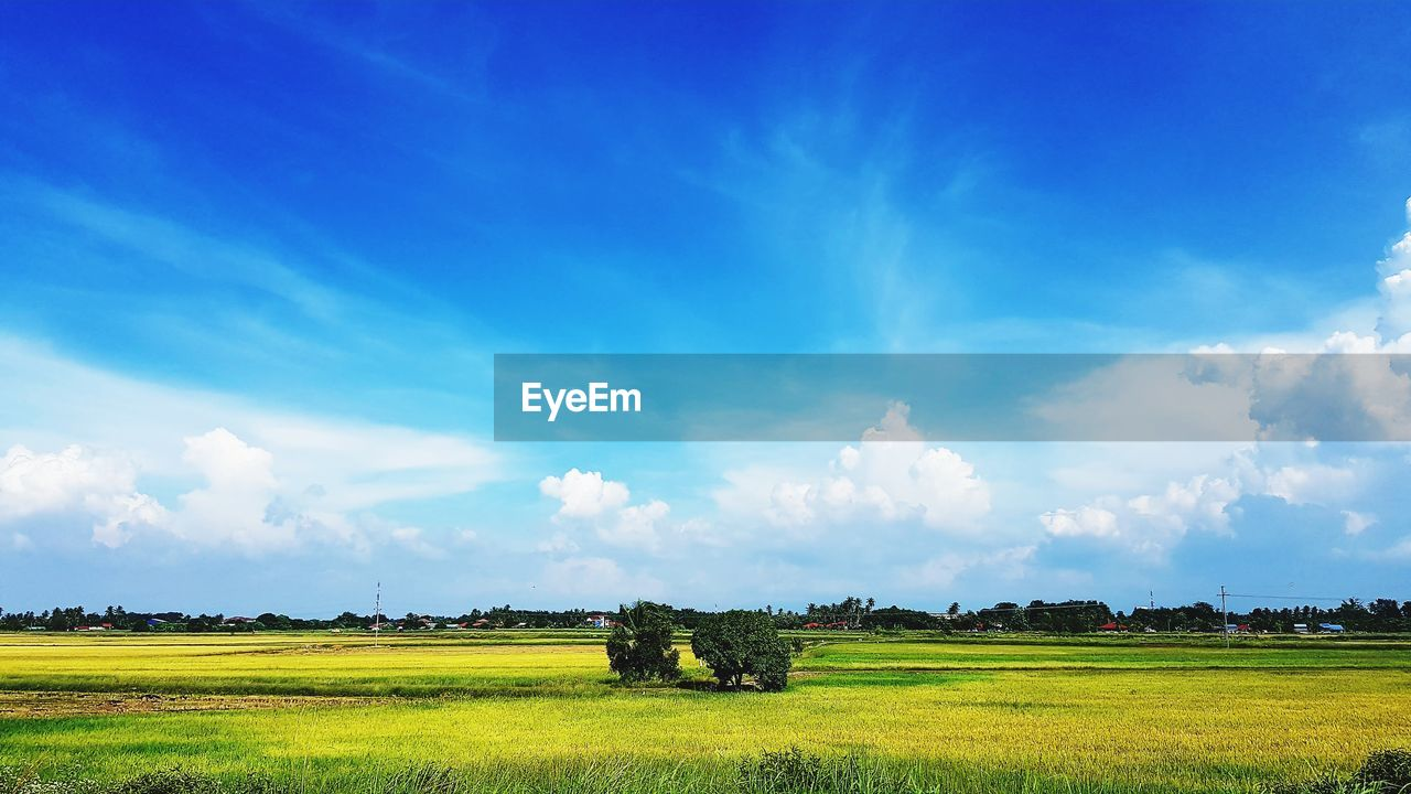 agriculture, field, tranquility, landscape, beauty in nature, tranquil scene, farm, sky, nature, cloud - sky, scenics, rural scene, day, no people, outdoors, blue, growth, tree, hay bale