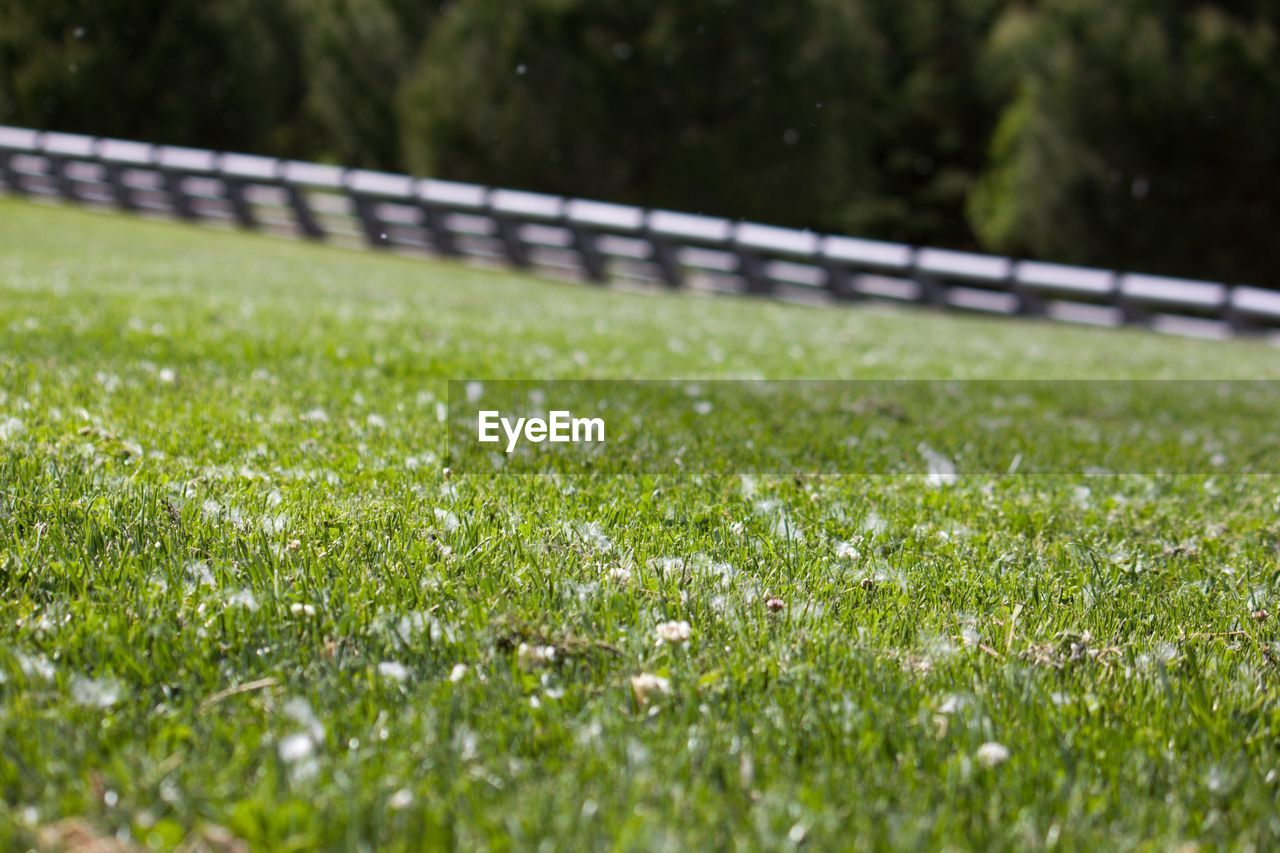 grass, plant, selective focus, land, field, green color, growth, nature, no people, day, beauty in nature, outdoors, close-up, sport, flower, freshness, flowering plant, tranquility, surface level, railing