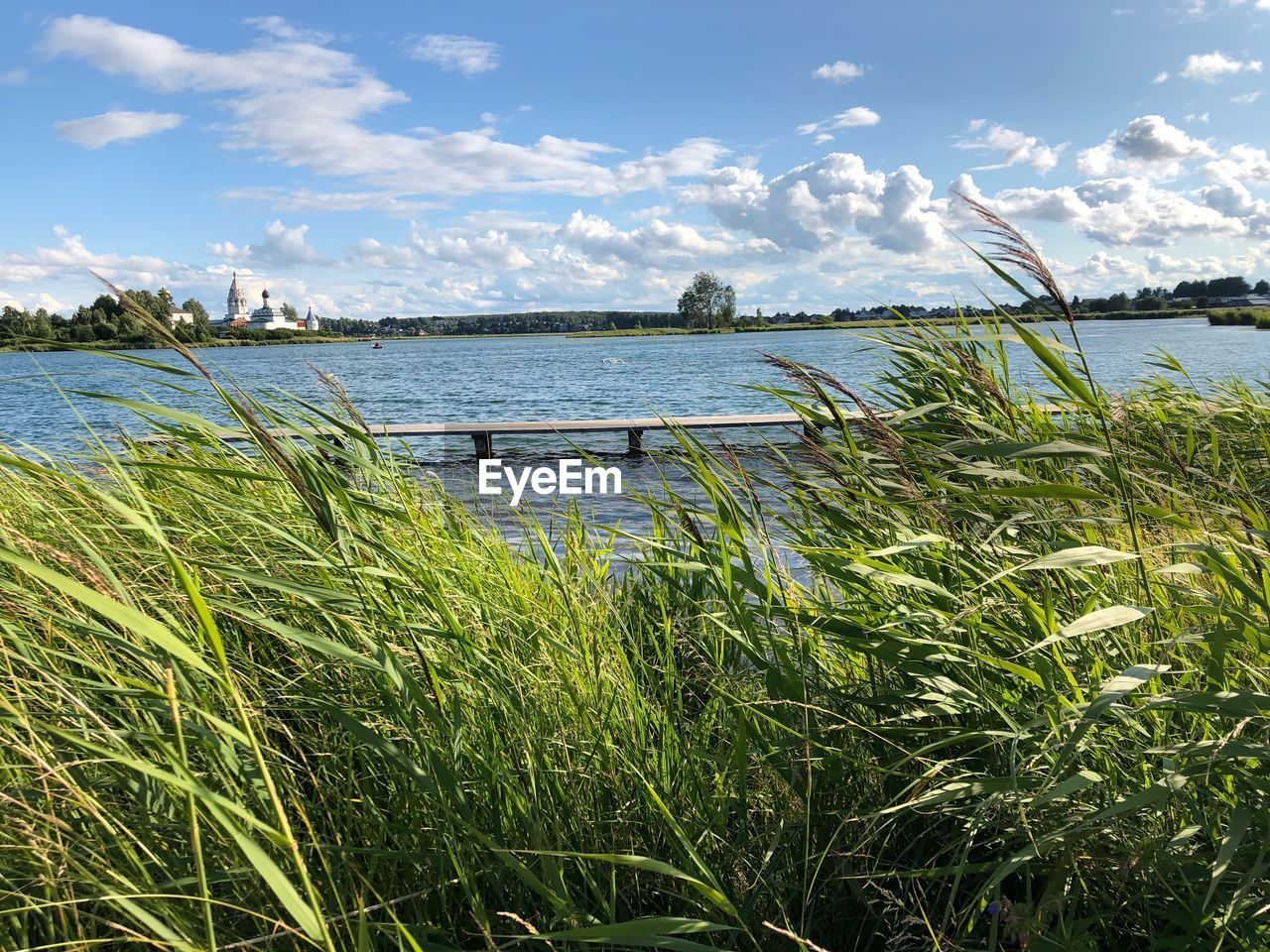 plant, water, sky, cloud - sky, growth, grass, beauty in nature, nature, tranquility, day, scenics - nature, tranquil scene, no people, green color, lake, non-urban scene, land, outdoors