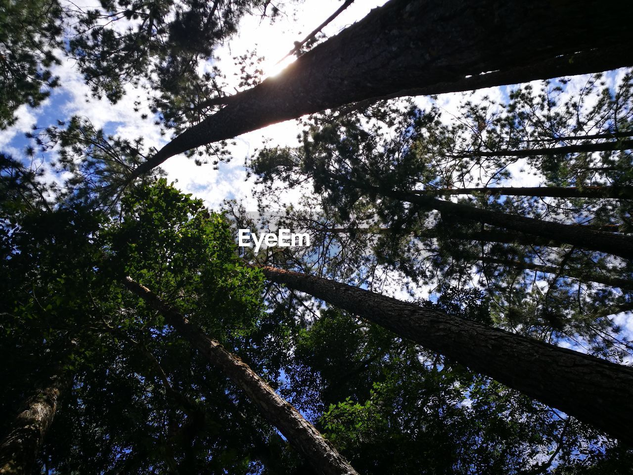 tree, low angle view, nature, growth, beauty in nature, day, branch, no people, outdoors, tranquility, forest, hope, sky