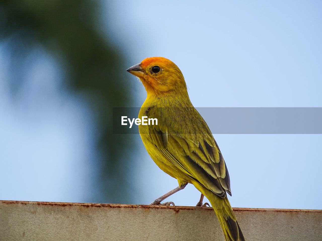 bird, animal themes, vertebrate, animal, one animal, animals in the wild, animal wildlife, perching, day, no people, looking, nature, focus on foreground, looking away, outdoors, close-up, yellow, low angle view, robin, beauty in nature