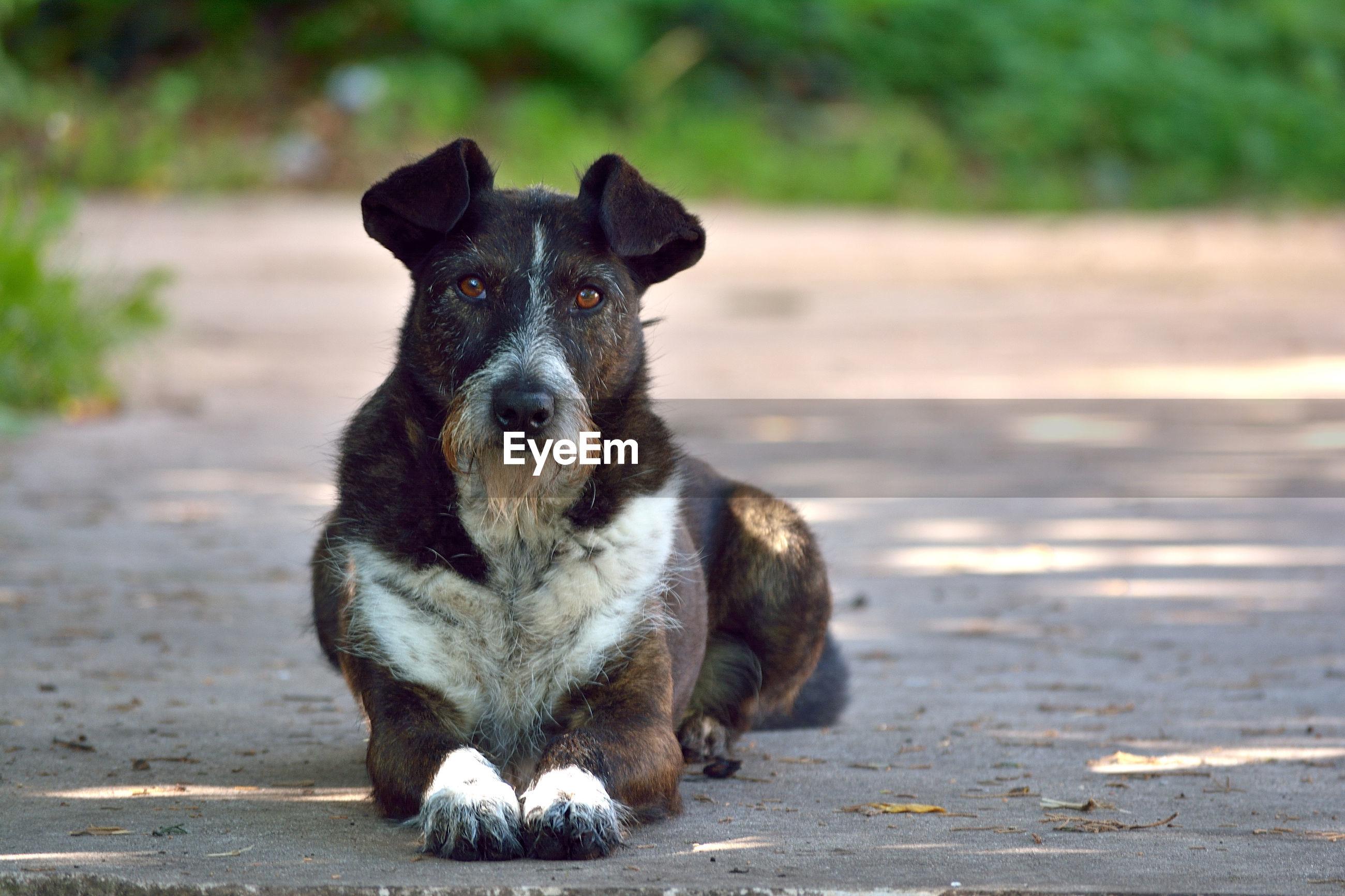 Portrait of dog sitting on street