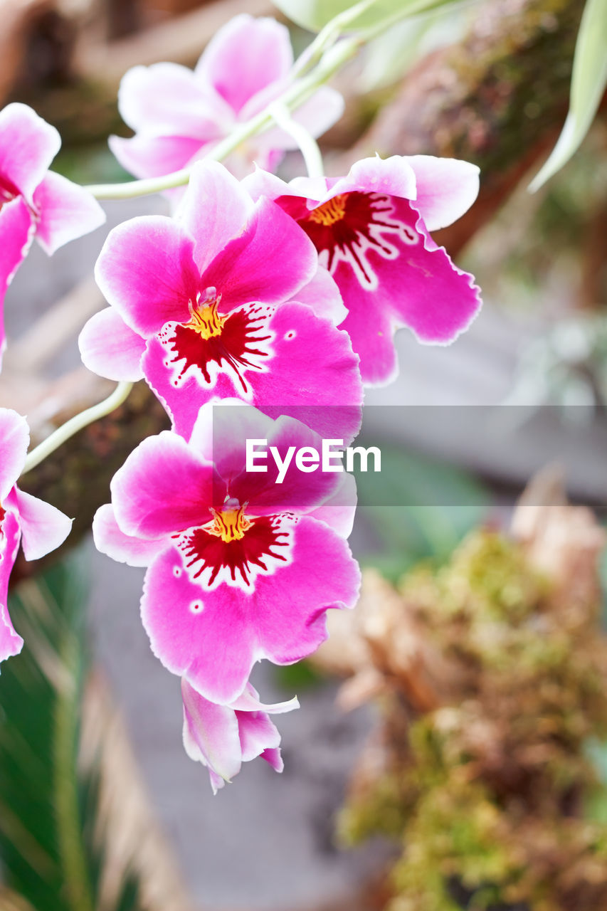 flower, petal, beauty in nature, flower head, nature, focus on foreground, pink color, fragility, growth, freshness, day, plant, close-up, no people, outdoors, blooming