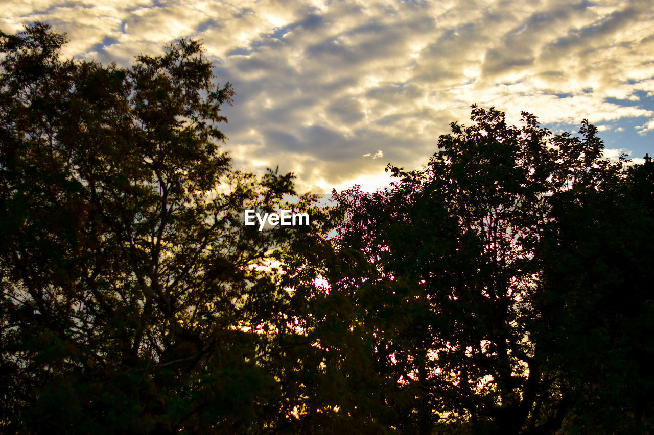 tree, plant, sky, cloud - sky, growth, beauty in nature, nature, no people, tranquility, sunset, low angle view, tranquil scene, outdoors, branch, scenics - nature, silhouette, sunlight, day, land, dusk