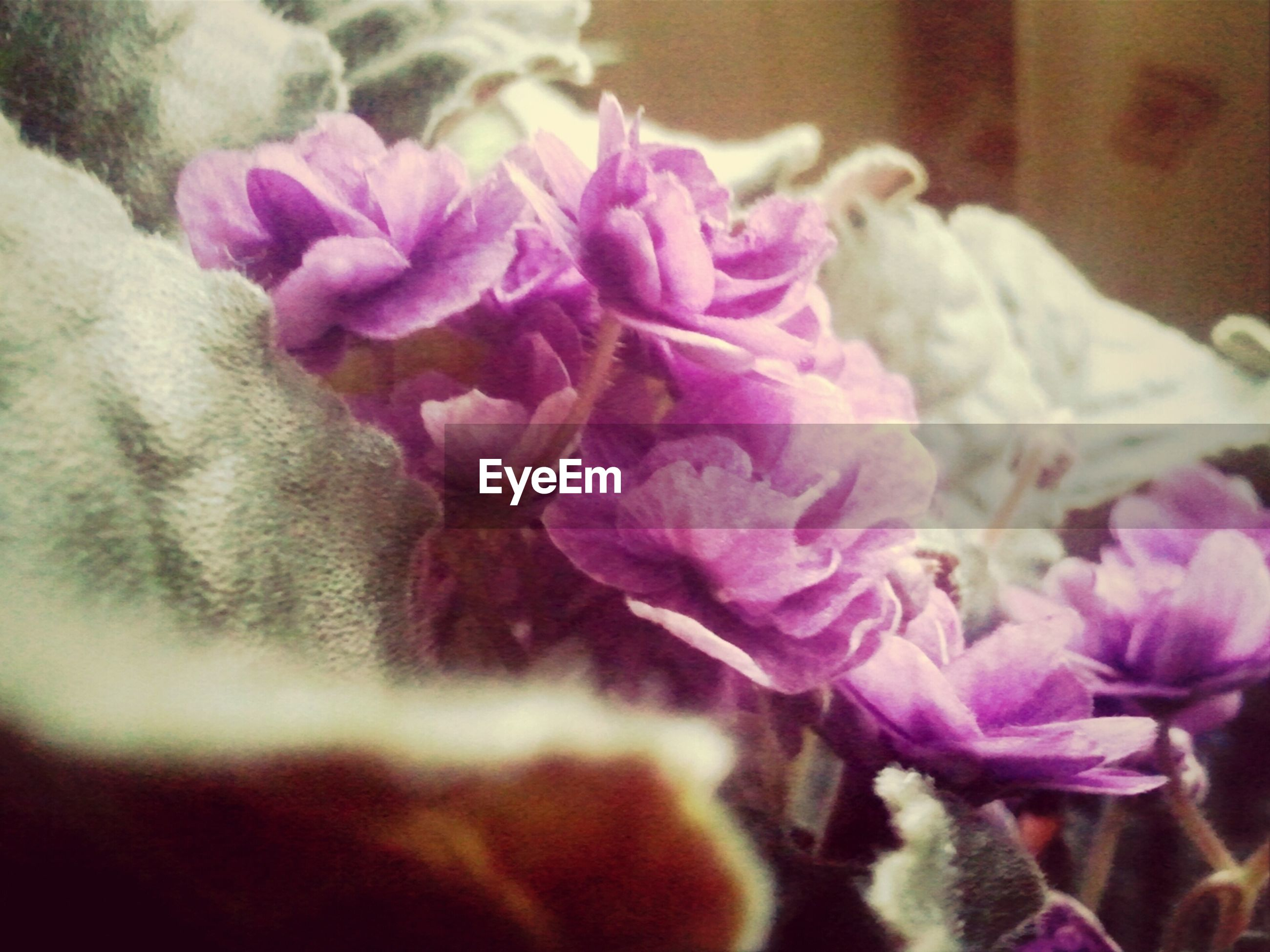 flower, petal, freshness, fragility, close-up, flower head, indoors, beauty in nature, focus on foreground, pink color, growth, selective focus, nature, bunch of flowers, purple, blooming, softness, plant, no people, rose - flower