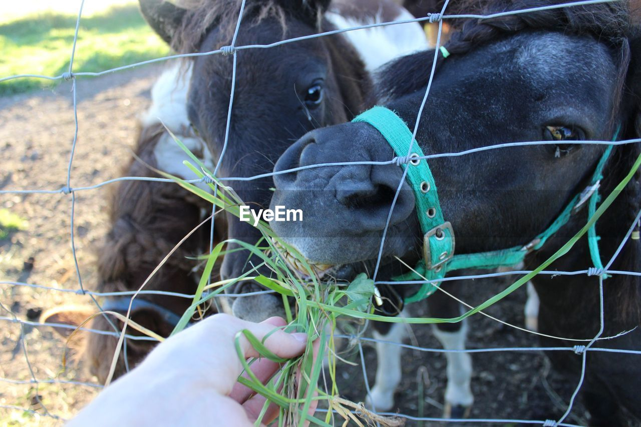 Close-Up Of Horse Holding Fence