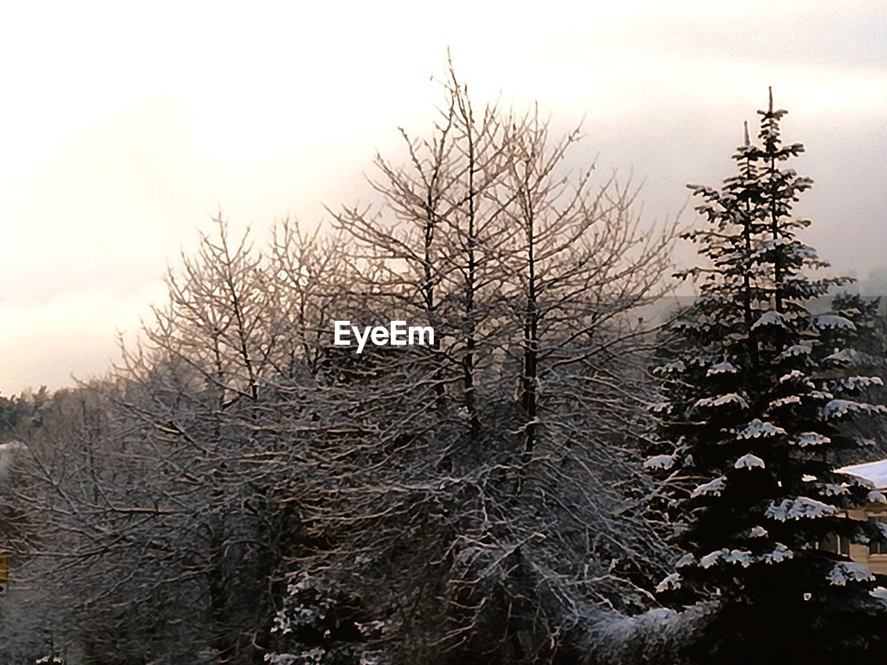 winter, snow, nature, cold temperature, tree, bare tree, sky, beauty in nature, outdoors, no people, tranquility, landscape, scenics, branch, day
