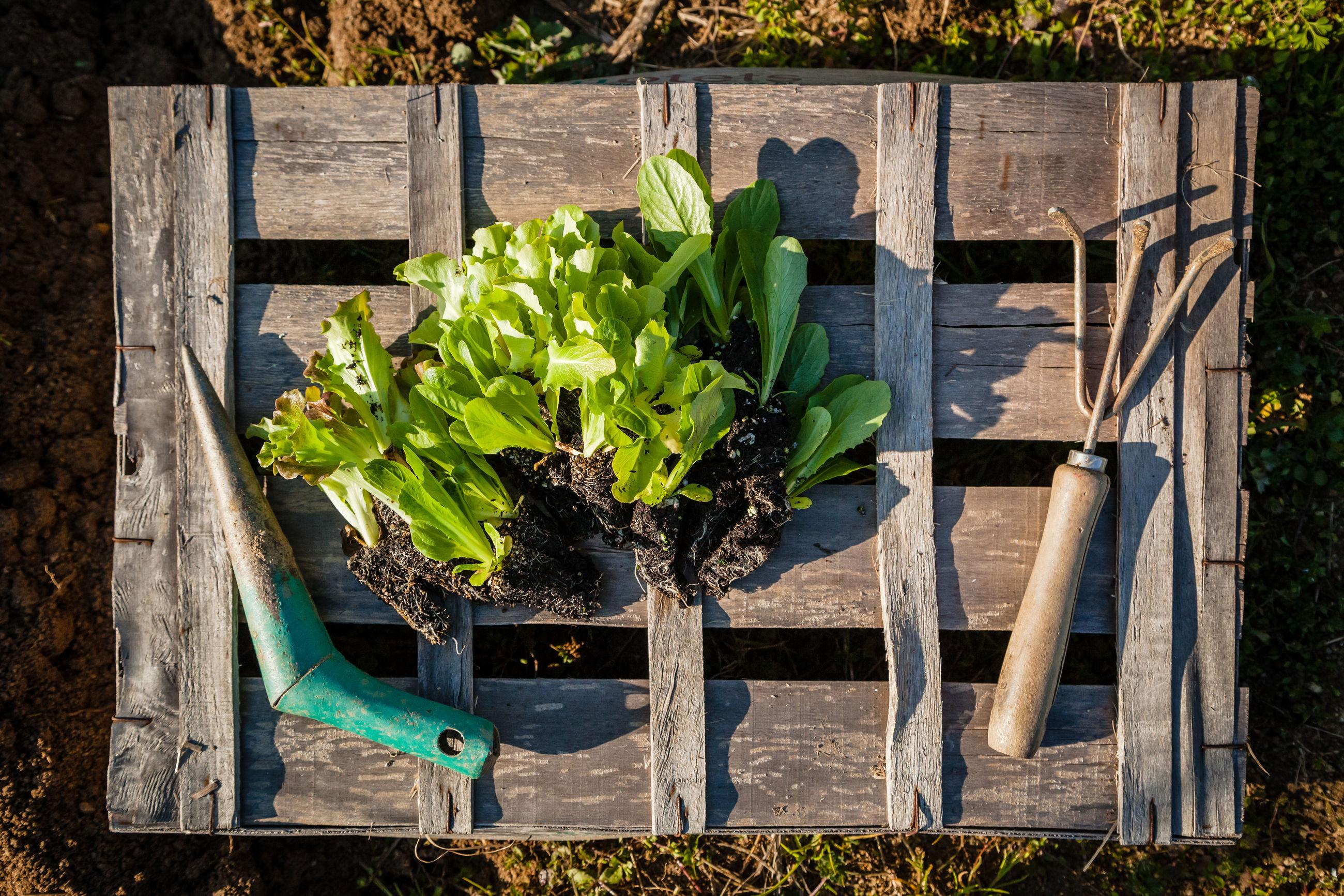 HIGH ANGLE VIEW OF FOOD ON PLANT