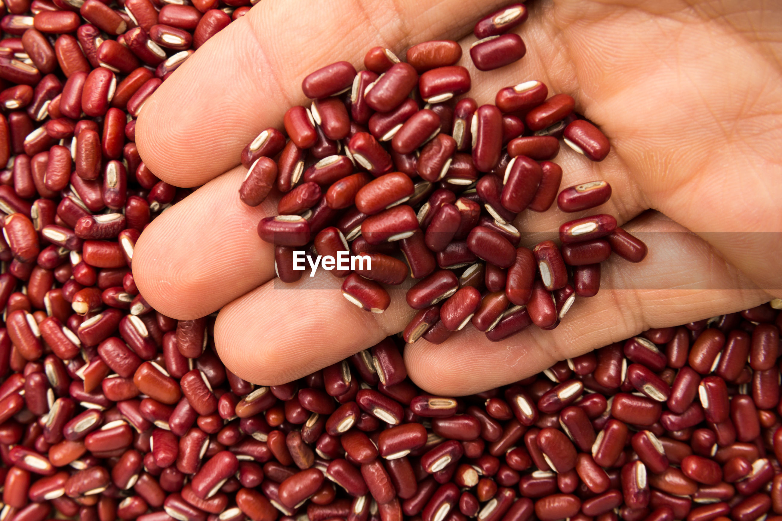 CLOSE-UP OF HUMAN HAND HOLDING BEANS