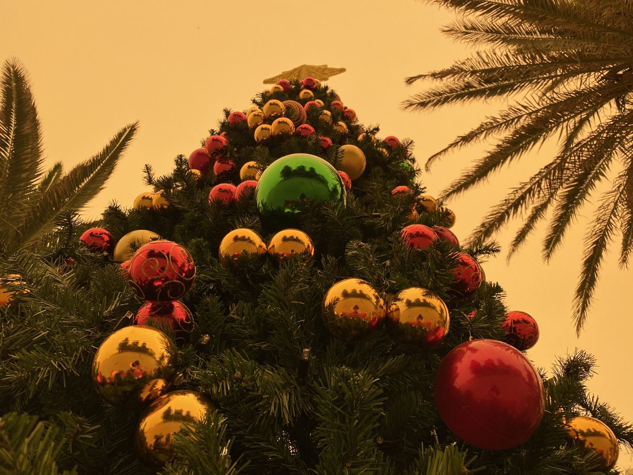tree, plant, sky, nature, no people, decoration, celebration, holiday, growth, christmas decoration, christmas, low angle view, christmas ornament, palm tree, outdoors, christmas tree, tropical climate, holiday - event, green color