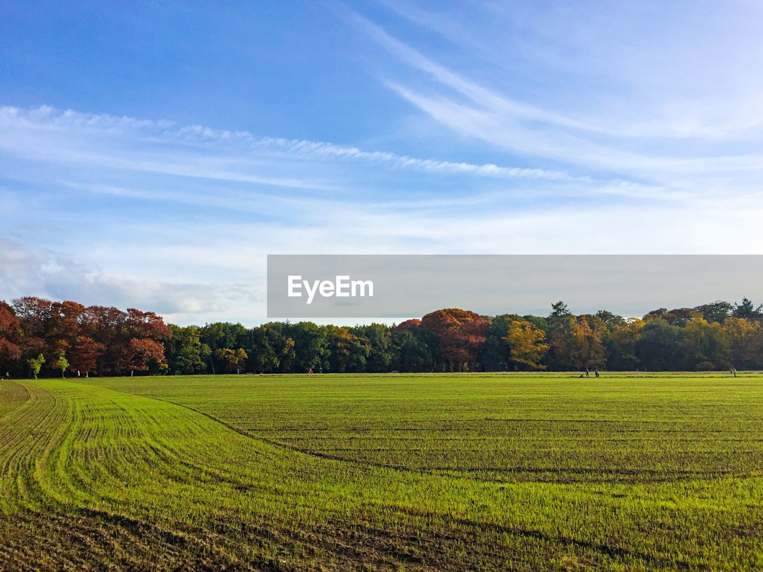 Scenic view of grassy landscape against sky during autumn