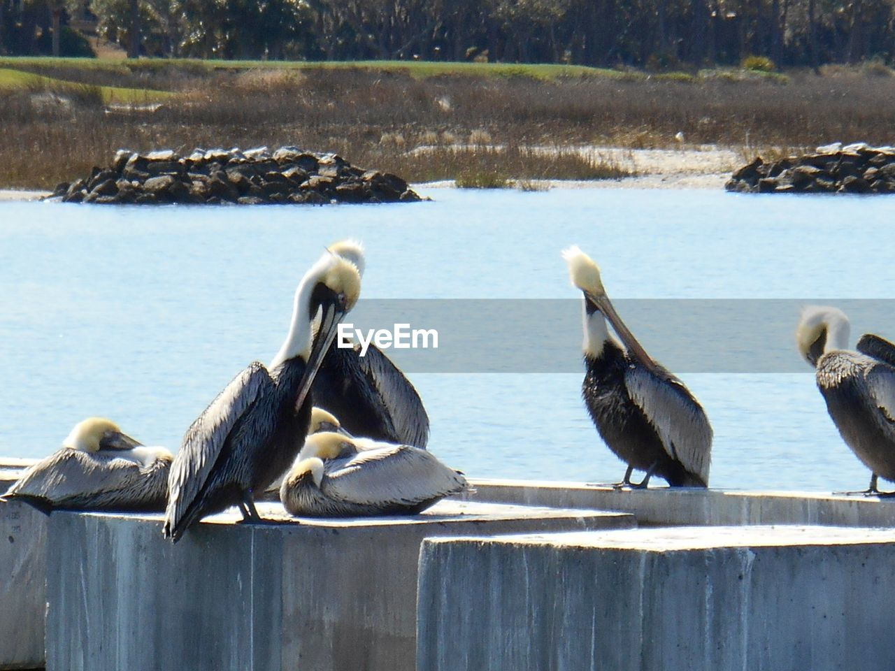 Close-Up Of Pelicans Perching On Bridge Over River