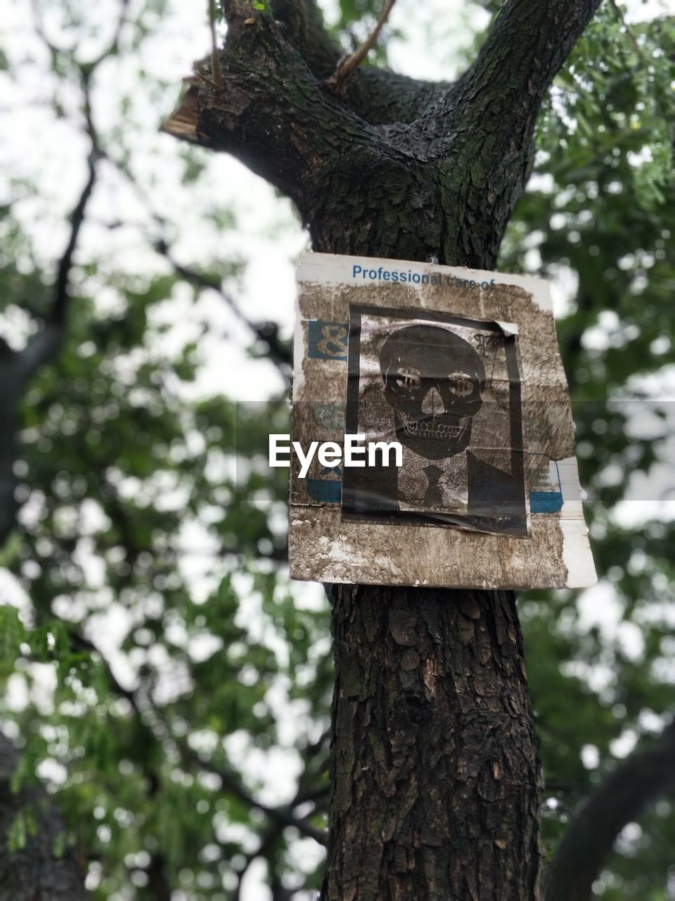 tree, tree trunk, day, focus on foreground, branch, no people, outdoors, wood - material, communication, low angle view, close-up, nature, growth