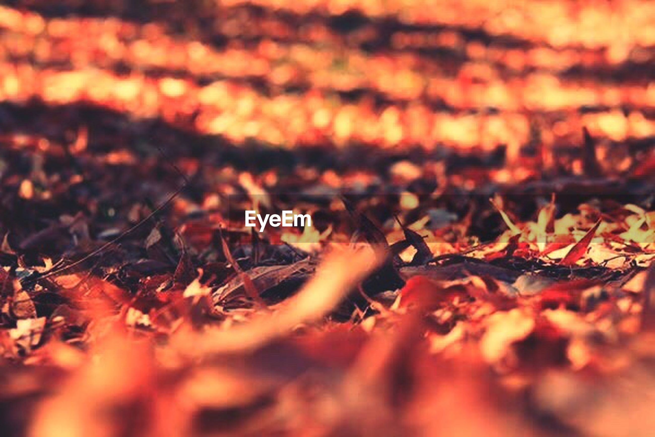 change, autumn, leaf, nature, close-up, no people, outdoors, backgrounds, full frame, beauty in nature, day, maple