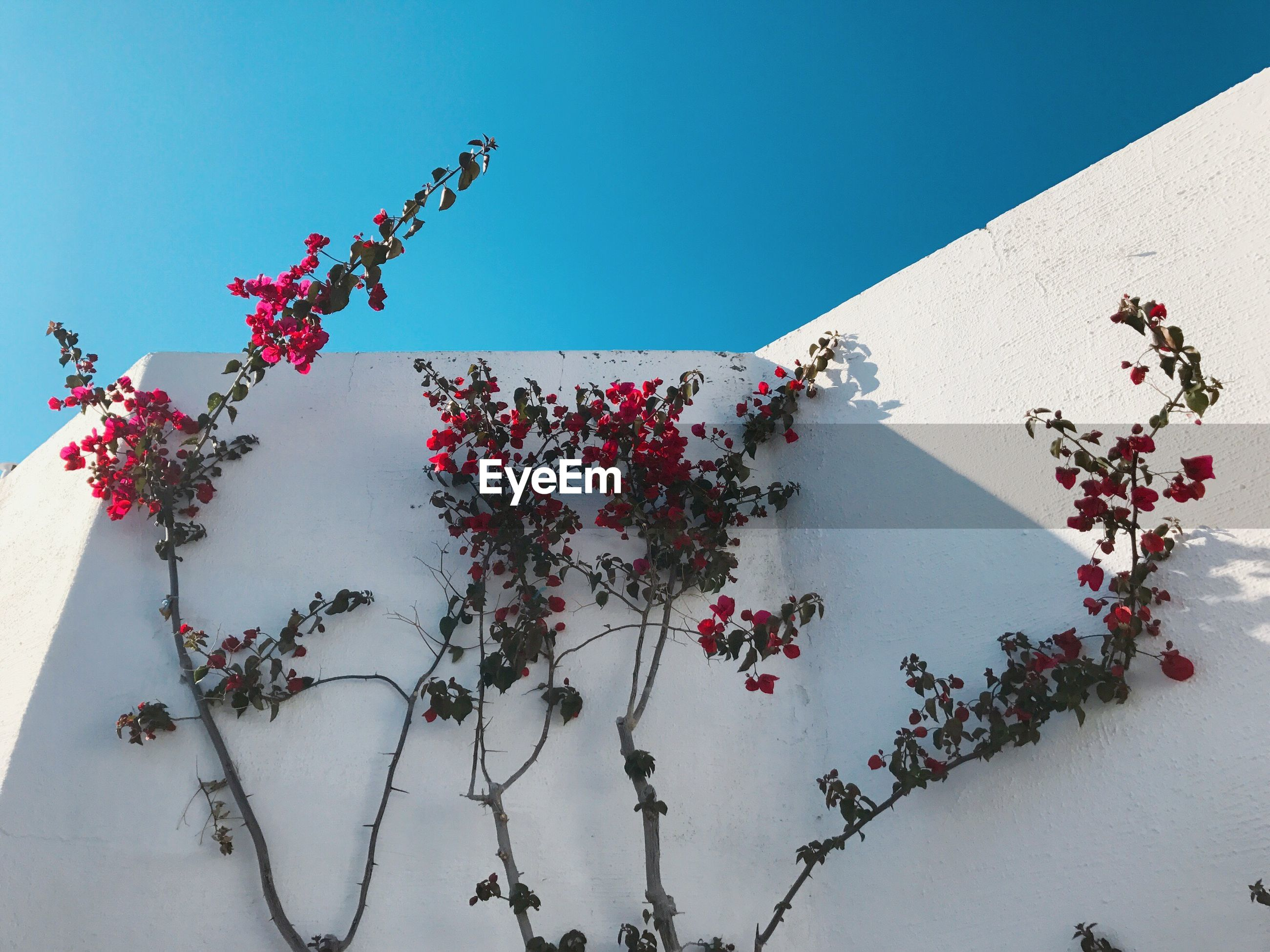 Low angle view of plants growing by wall against sky