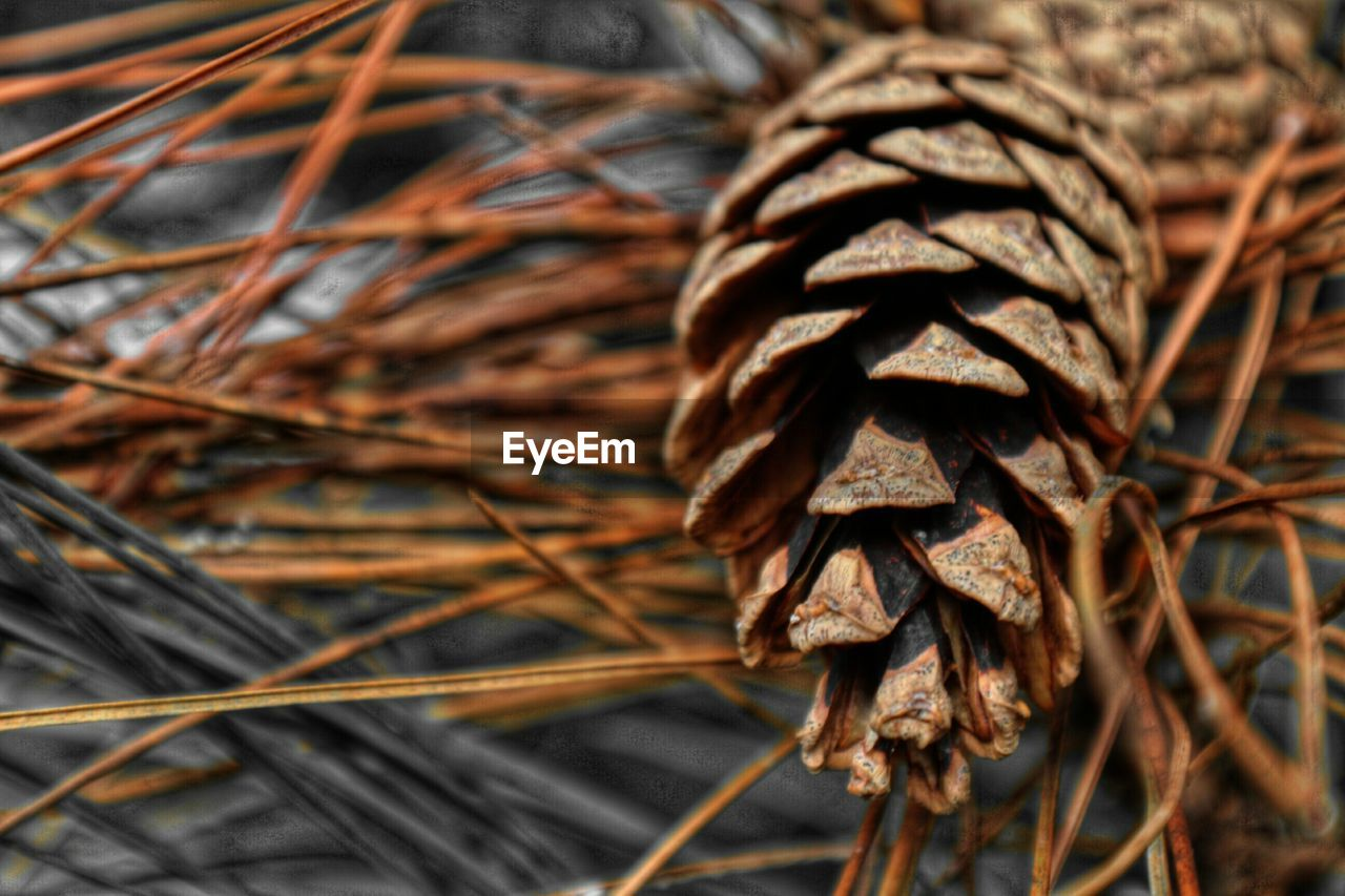 Close-up of pine cone on wood