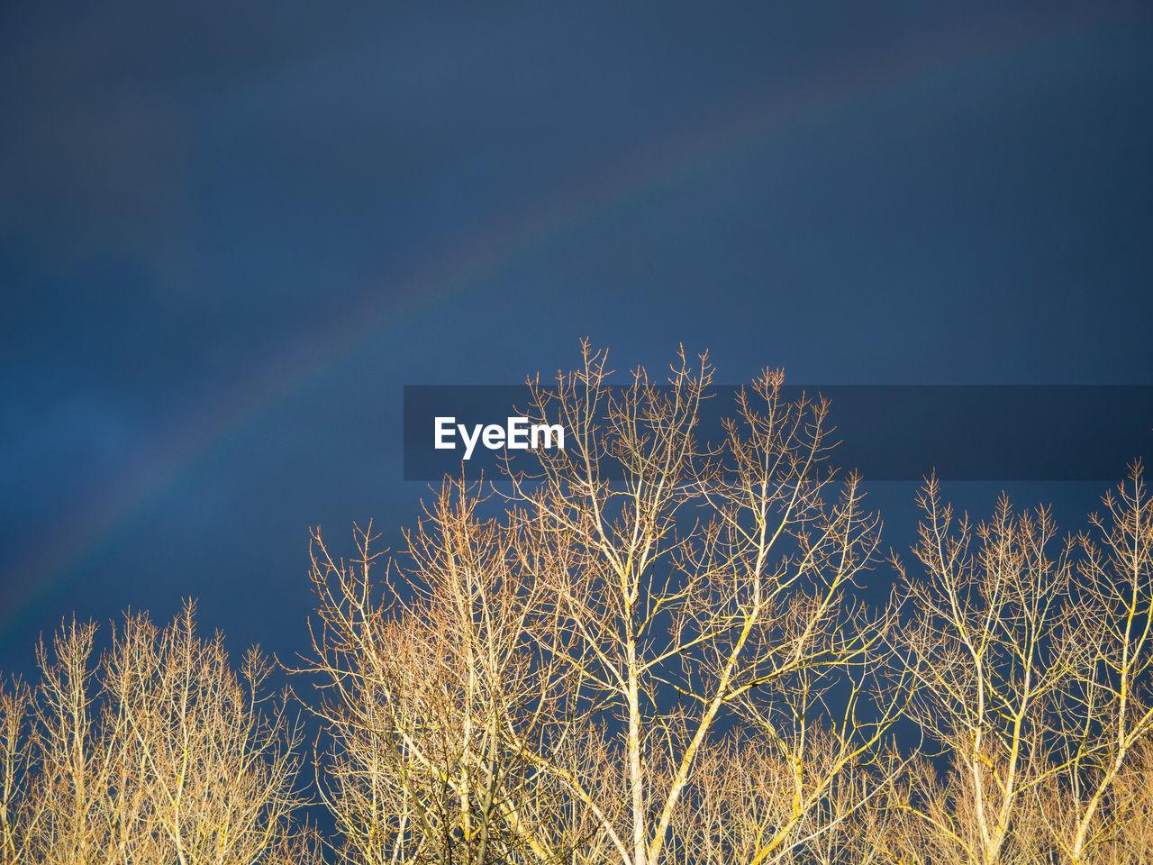 Rainbow over bare trees and dark sky in autumn