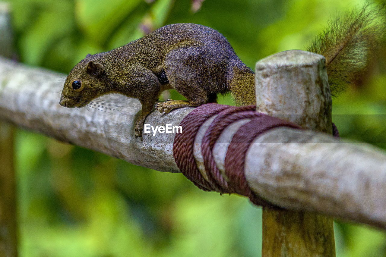 one animal, animals in the wild, animal themes, focus on foreground, animal wildlife, close-up, no people, day, wood - material, outdoors, nature, reptile, mammal