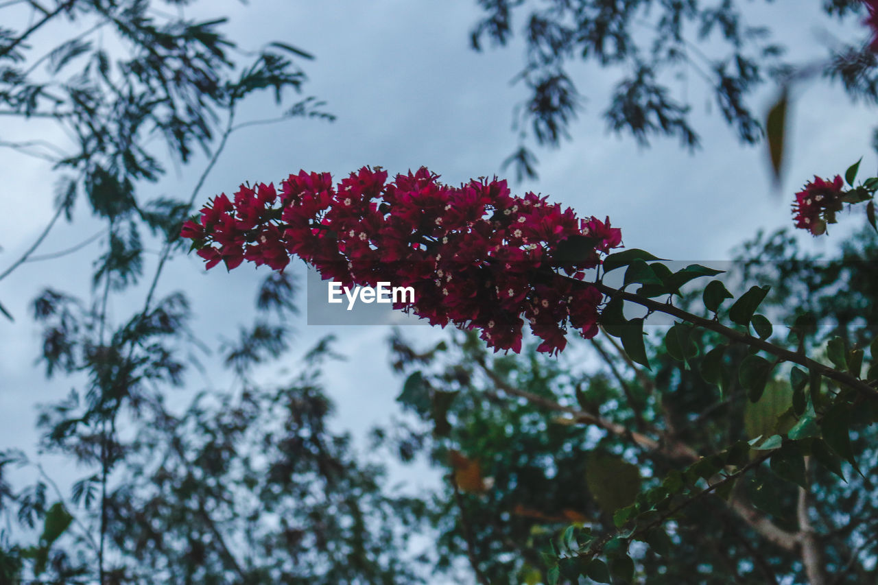 plant, growth, flowering plant, beauty in nature, flower, red, freshness, focus on foreground, vulnerability, close-up, fragility, nature, day, petal, no people, low angle view, tree, flower head, inflorescence, selective focus, outdoors