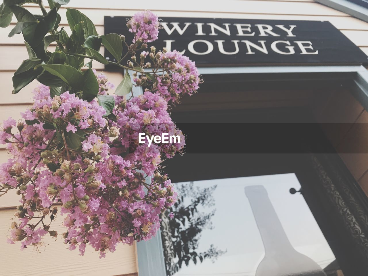 flower, flowering plant, plant, text, nature, freshness, beauty in nature, no people, communication, day, fragility, growth, vulnerability, close-up, western script, outdoors, pink color, tree, low angle view, flower arrangement, flower head, bouquet