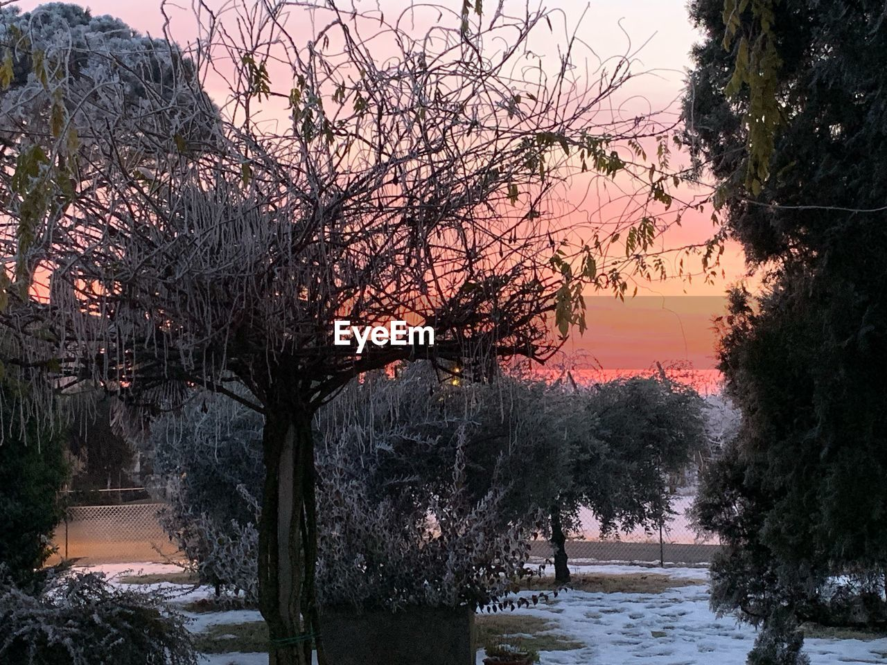 tree, plant, nature, sky, sunset, water, no people, beauty in nature, tranquility, growth, scenics - nature, tranquil scene, branch, cold temperature, snow, winter, bare tree, outdoors, treelined