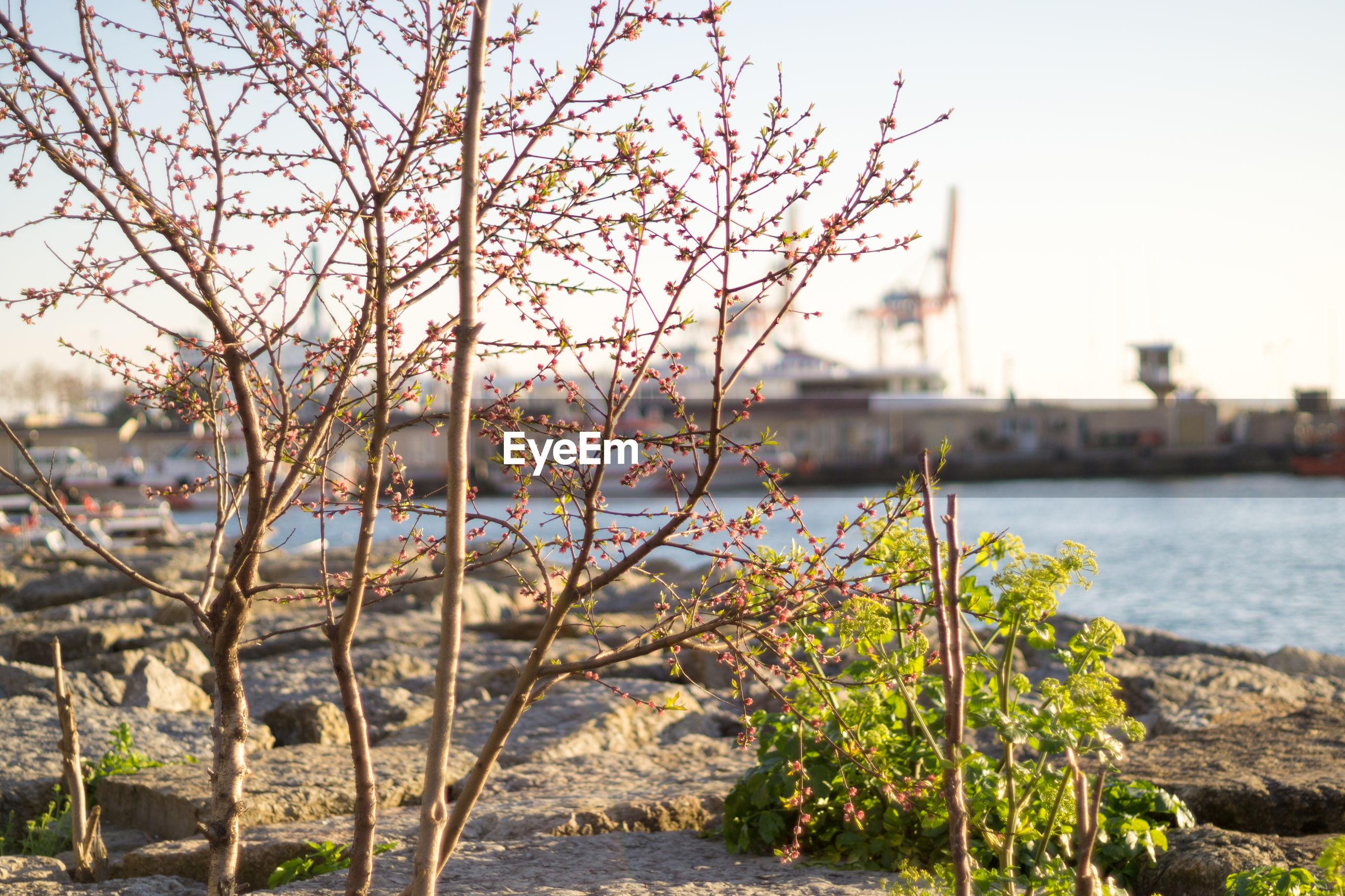Trees growing in harbor
