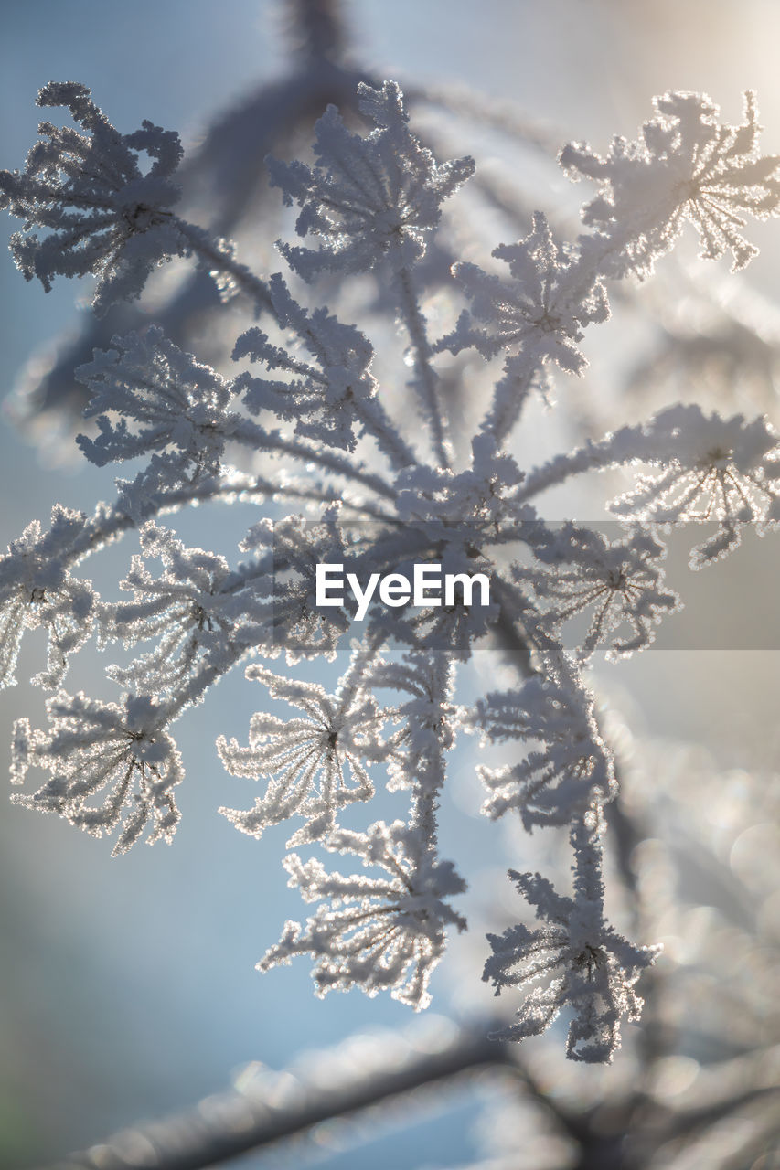 cold temperature, winter, snow, nature, frozen, beauty in nature, ice, no people, day, close-up, tree, outdoors, snowflake, fragility, ice crystal, sky