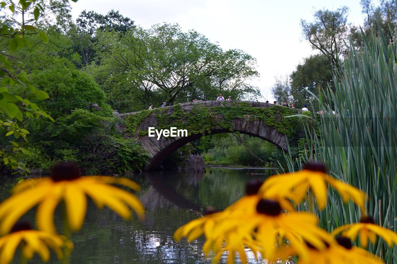 water, plant, tree, growth, nature, beauty in nature, river, day, no people, connection, focus on background, sky, tranquility, yellow, green color, bridge, selective focus, flower, bridge - man made structure, outdoors, flowing water