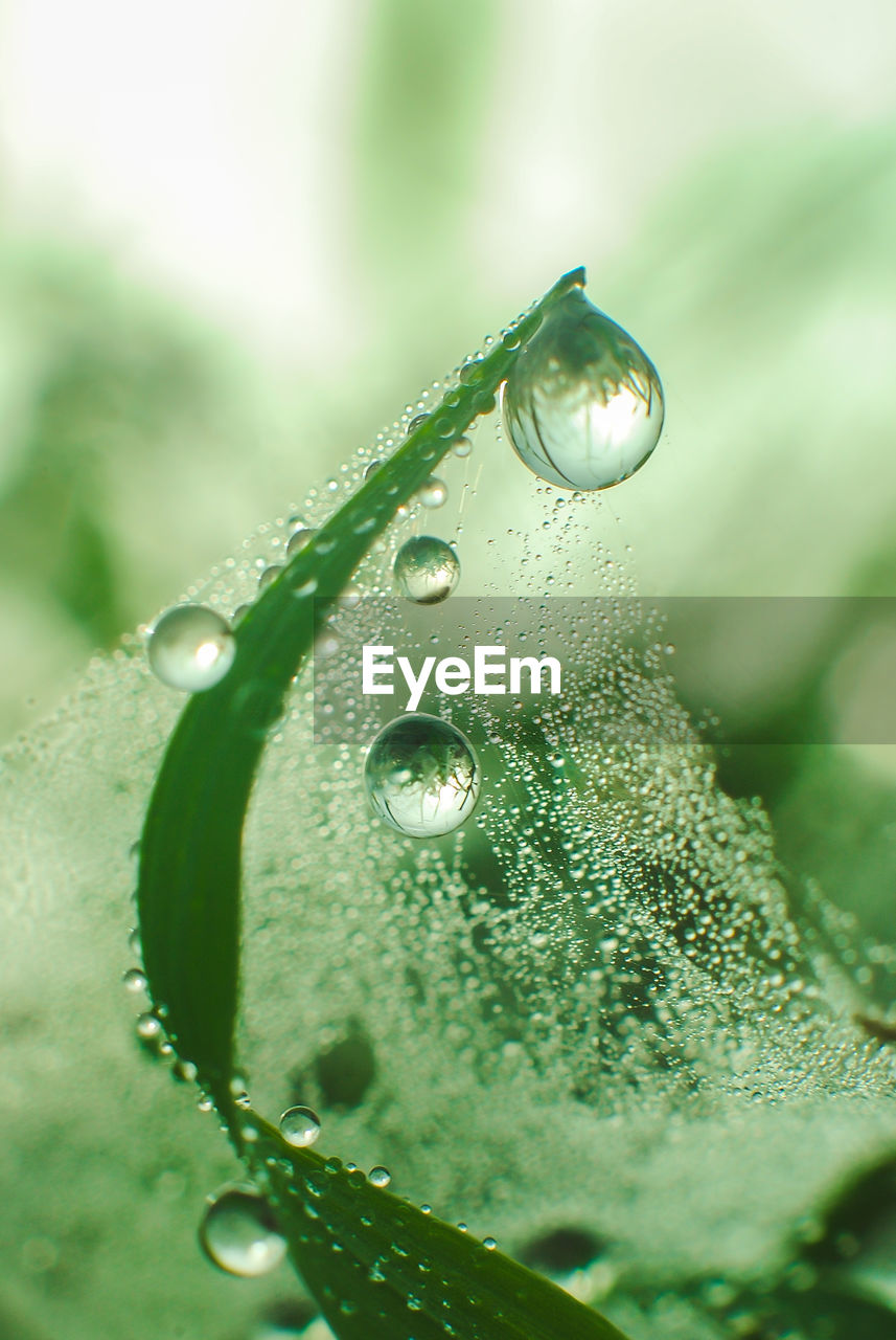 drop, wet, water, plant, close-up, freshness, nature, green color, vulnerability, beauty in nature, selective focus, fragility, no people, leaf, purity, plant part, dew, growth, rain, raindrop, outdoors, rainy season, blade of grass