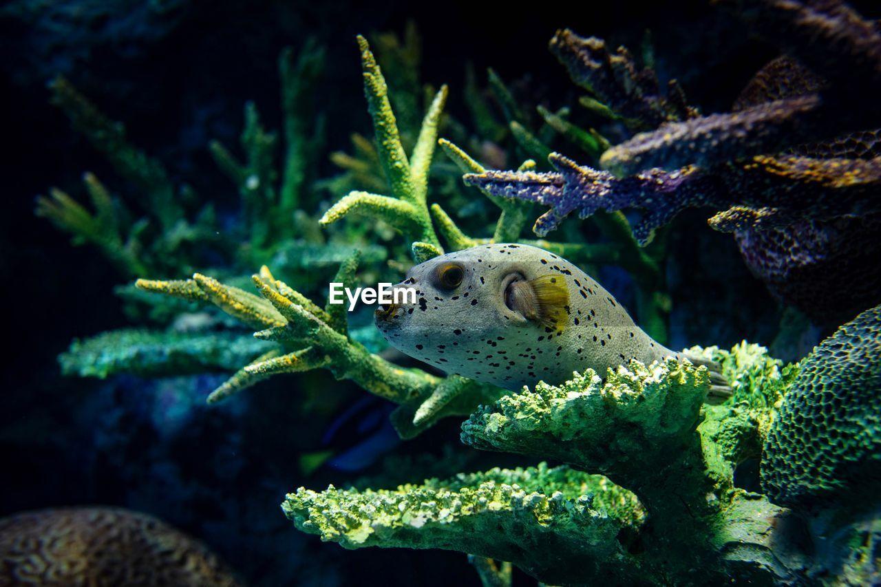 animals in the wild, animal wildlife, animal, animal themes, one animal, sea life, marine, underwater, undersea, sea, nature, swimming, water, no people, vertebrate, close-up, fish, beauty in nature, tank