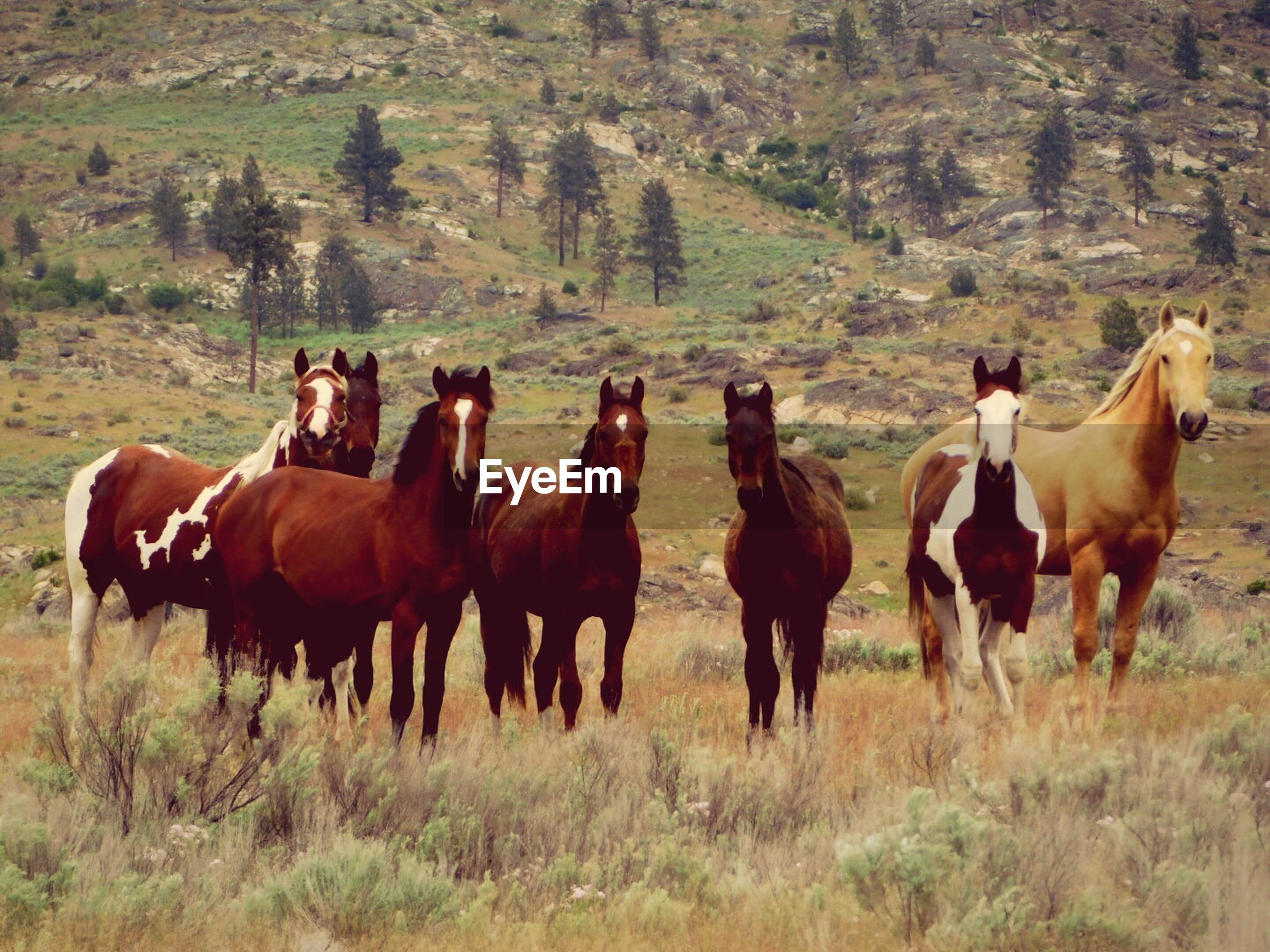 Horses standing on field against trees