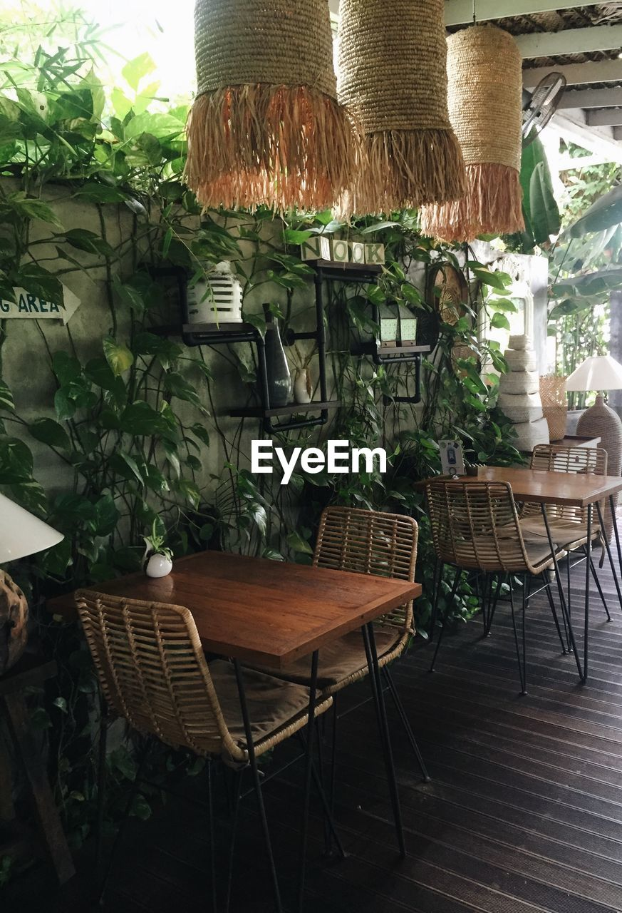 plant, chair, seat, table, no people, potted plant, wood - material, furniture, indoors, empty, nature, absence, business, wicker, cafe, leaf, plant part, green color, restaurant