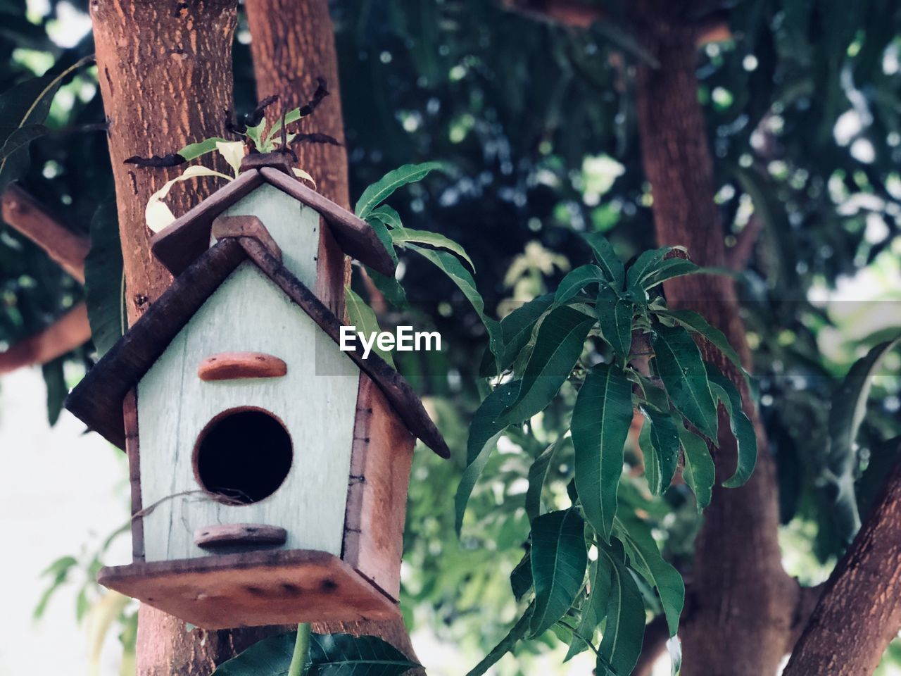 plant, birdhouse, focus on foreground, tree, nature, day, no people, growth, plant part, leaf, close-up, green color, tree trunk, outdoors, trunk, wood - material, low angle view, beauty in nature, tranquility, hole