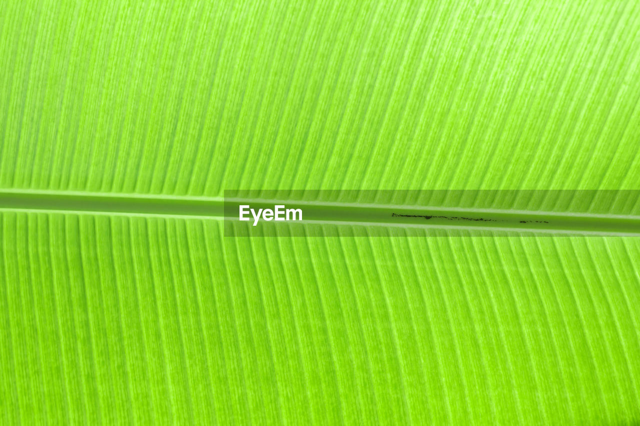 green color, full frame, backgrounds, pattern, plant part, leaf, no people, close-up, natural pattern, textured, beauty in nature, nature, leaf vein, leaves, banana leaf, growth, plant, vulnerability, fragility, extreme close-up, palm leaf, brightly lit