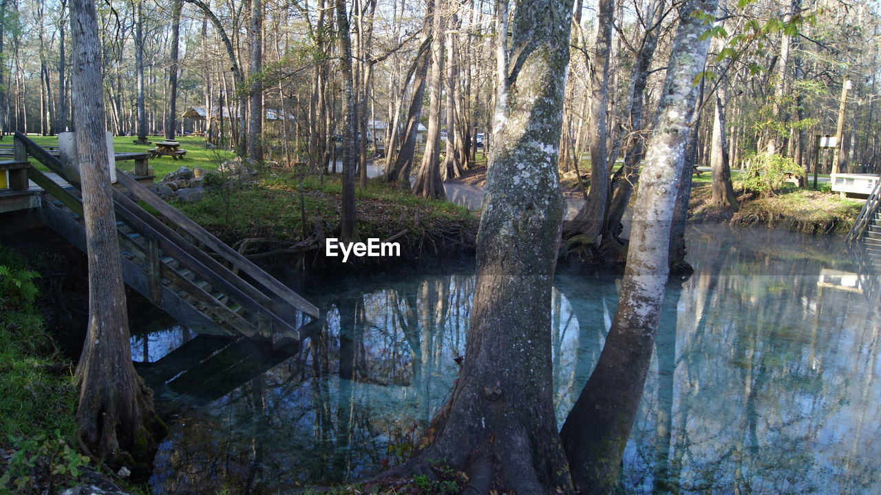 tree, forest, nature, tree trunk, outdoors, no people, tranquility, beauty in nature, day, water, scenics, branch