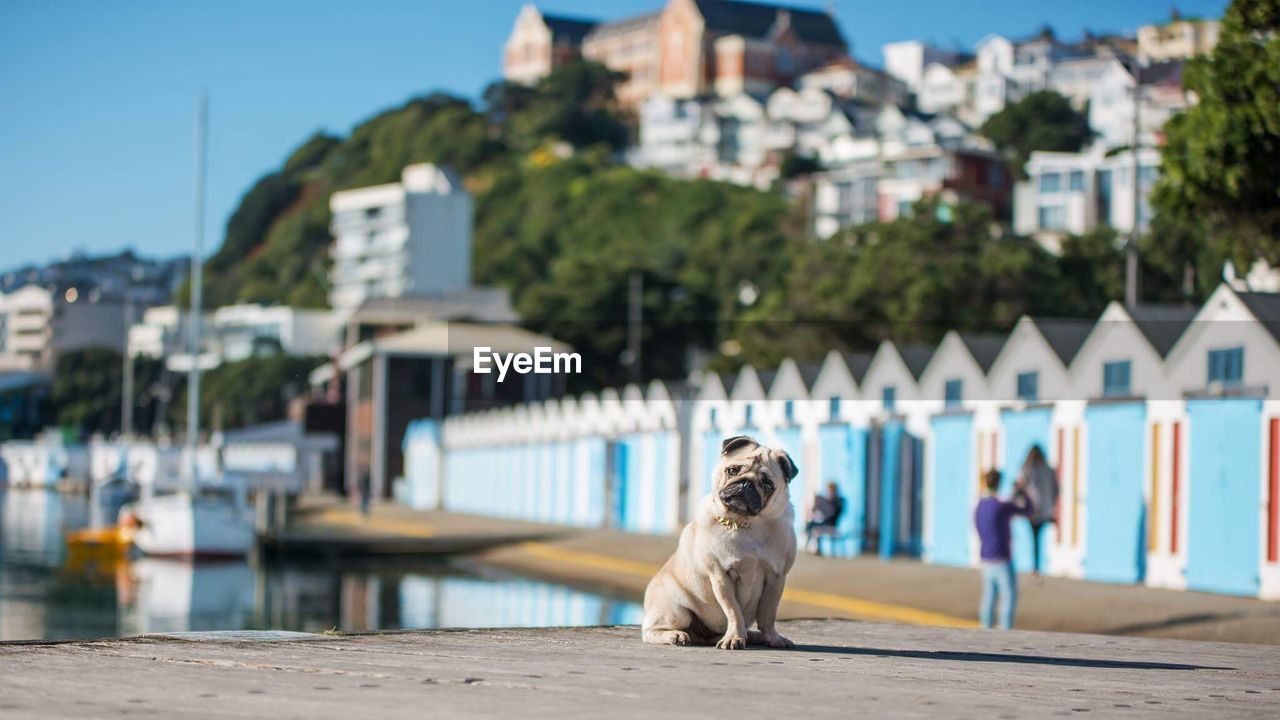Dog Sitting At Harbor In City