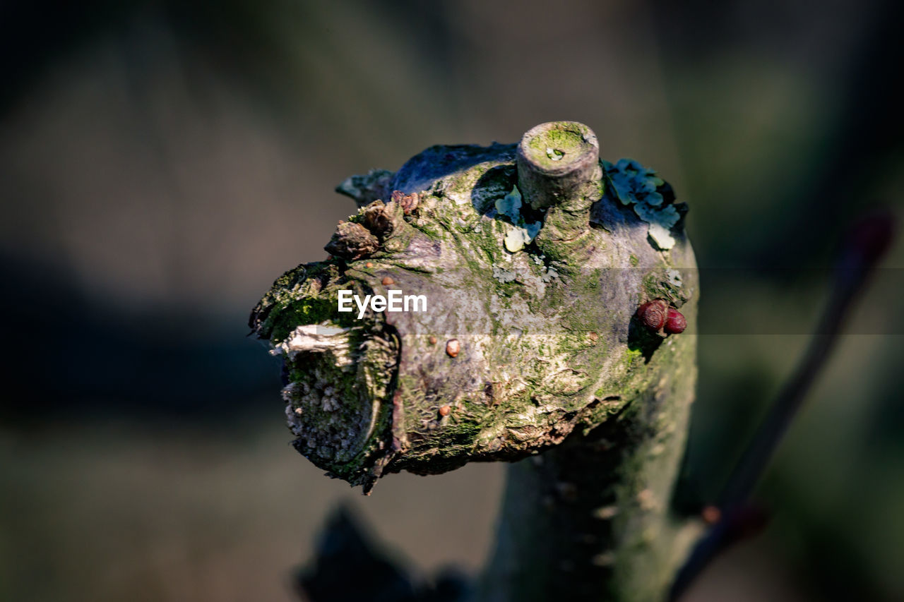 animal themes, animals in the wild, animal, animal wildlife, close-up, focus on foreground, vertebrate, one animal, no people, day, reptile, nature, lizard, selective focus, frog, outdoors, amphibian, animal body part, green color, animal head, animal eye
