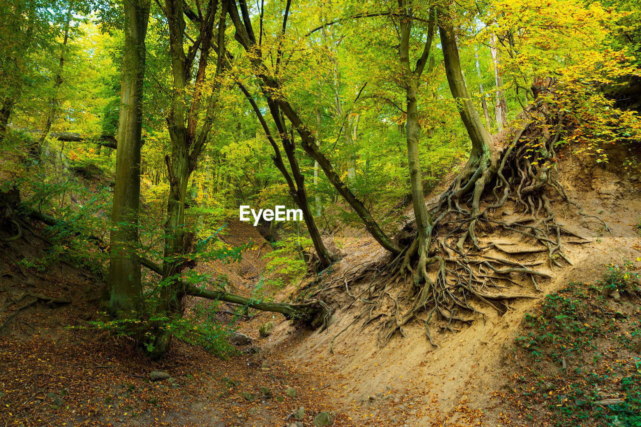 tree, forest, plant, land, nature, tranquility, autumn, woodland, no people, plant part, day, beauty in nature, tree trunk, trunk, environment, scenics - nature, leaf, outdoors, landscape, foliage, change, rainforest
