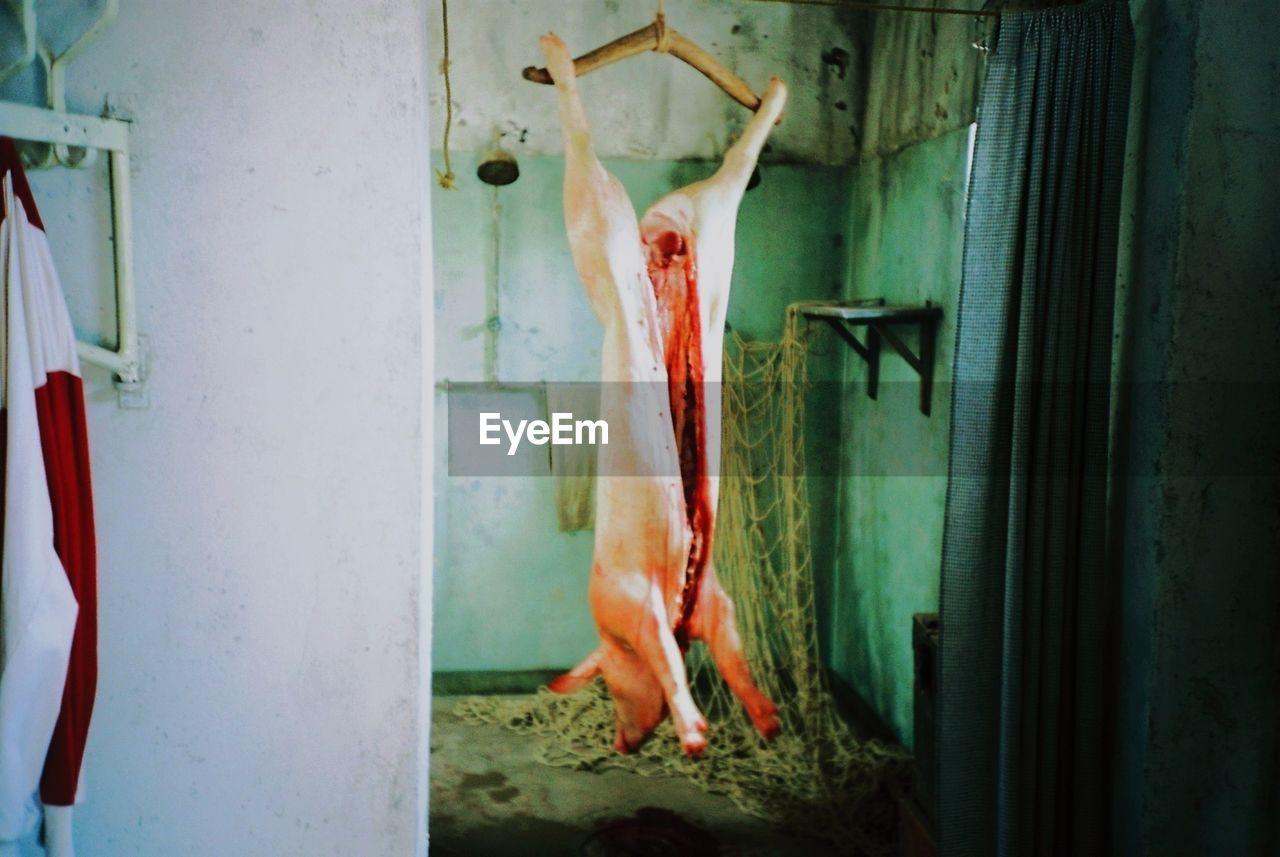 Pig hanging in slaughterhouse