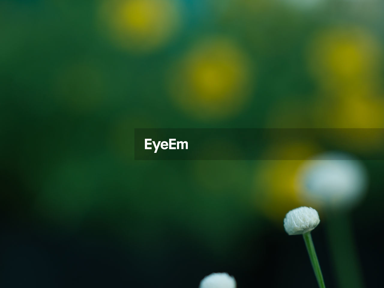plant, growth, flower, vulnerability, beauty in nature, fragility, flowering plant, freshness, close-up, nature, no people, selective focus, focus on foreground, day, green color, beginnings, plant stem, new life, outdoors, bud, flower head