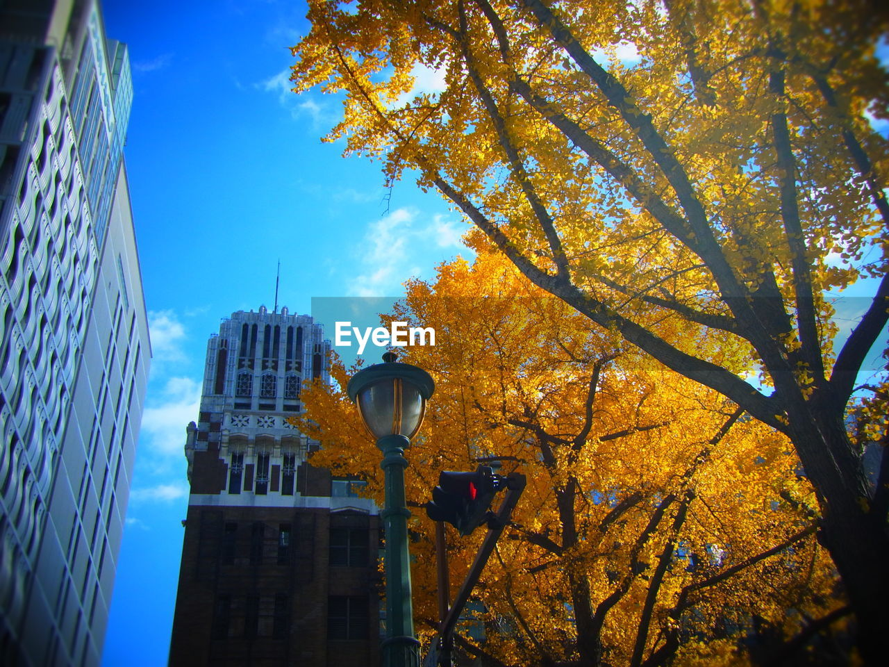 Low Angle View Of Street Light By Autumn Trees Against Skyscrapers