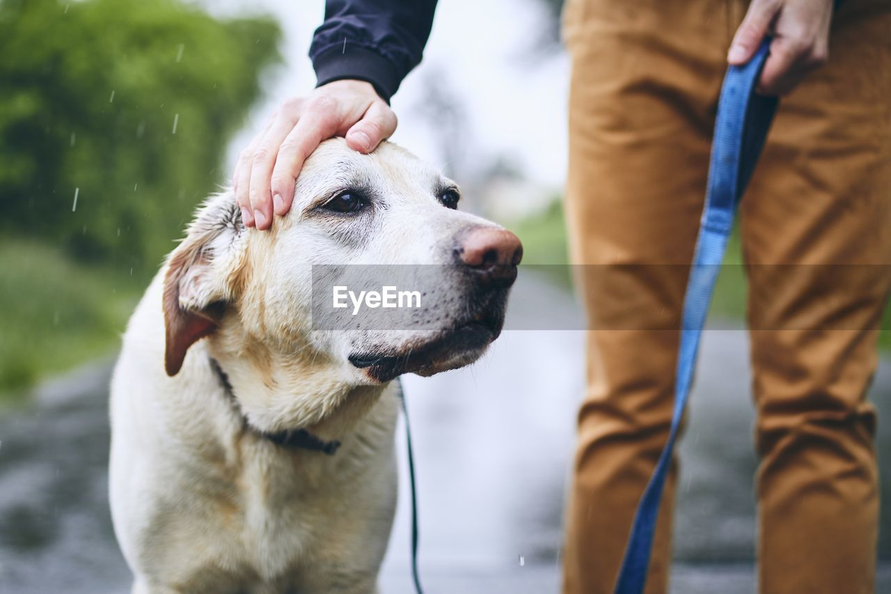 Midsection of man stroking dog