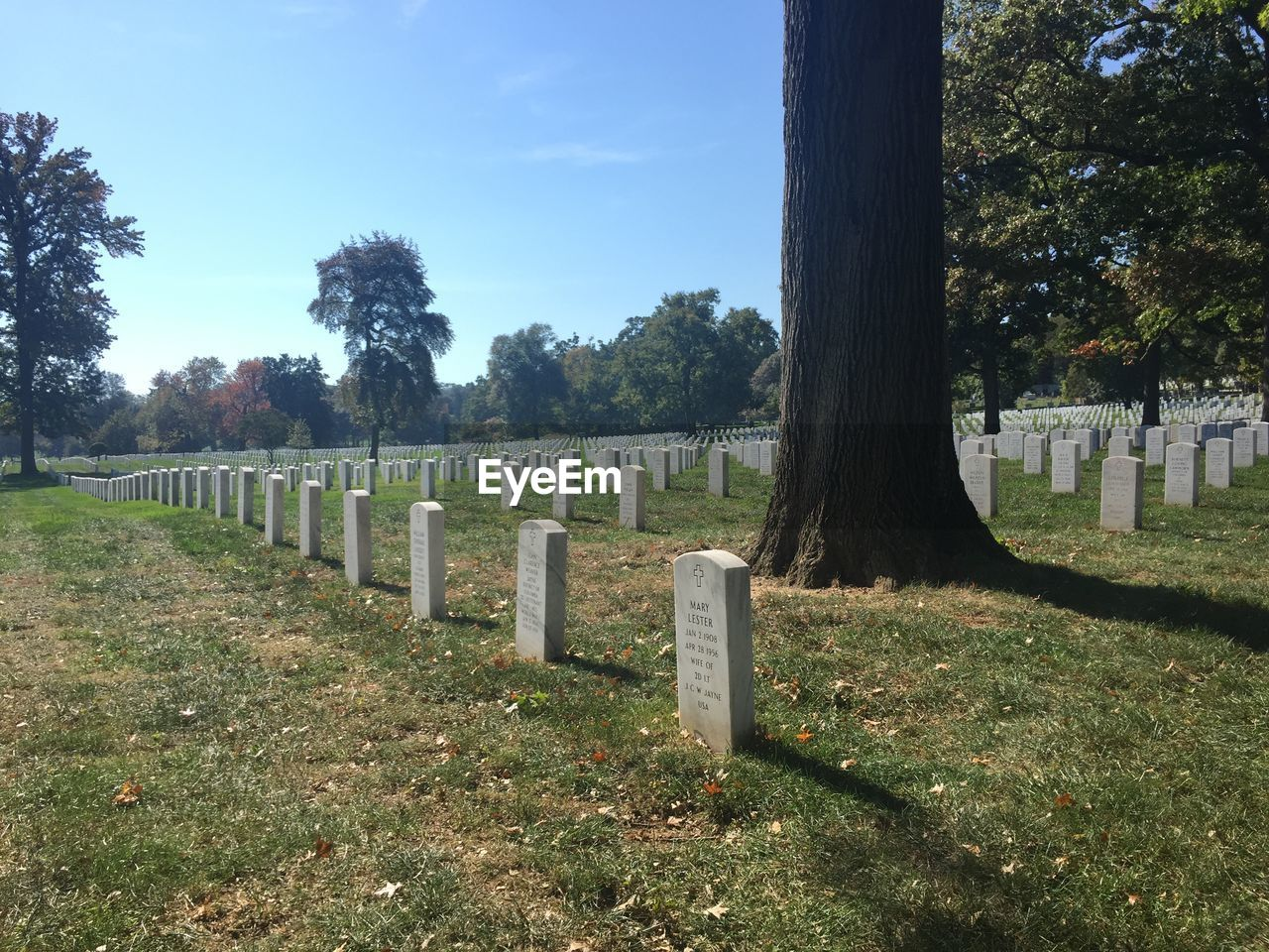 cemetery, tombstone, tree, memorial, grass, in a row, day, graveyard, gravestone, no people, grave, outdoors, sky, growth, landscape, nature