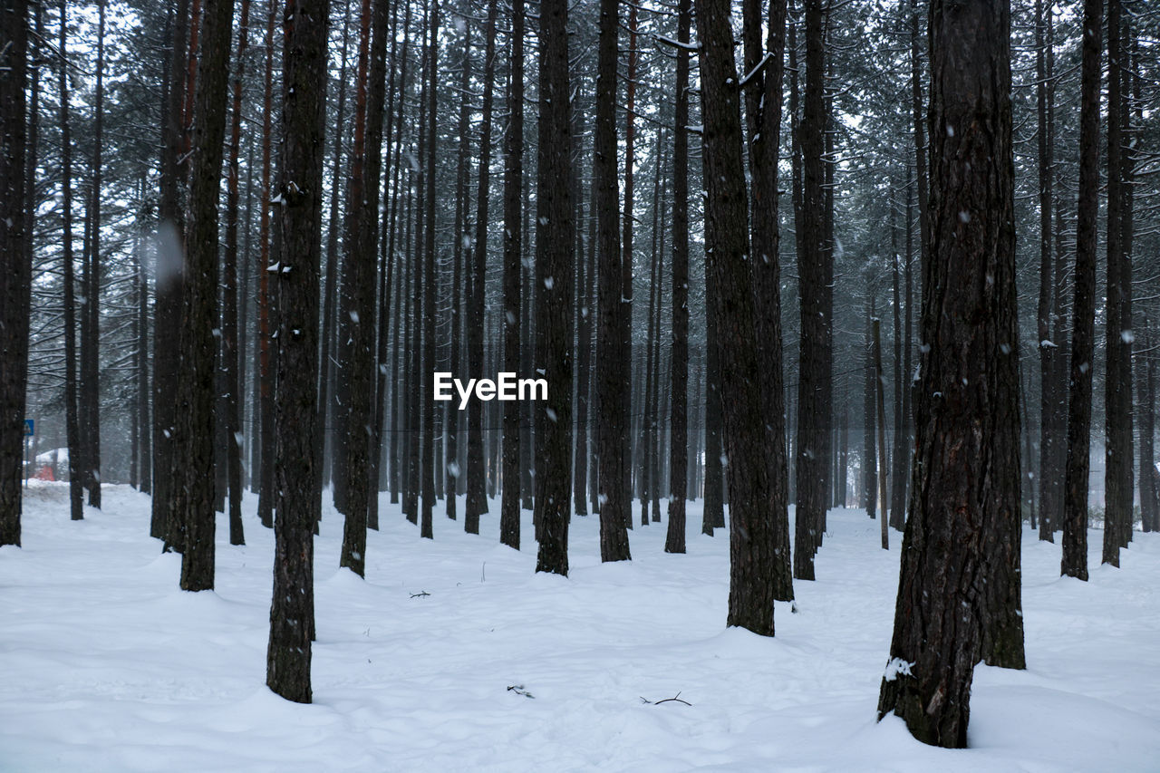 Panoramic Shot Of Trees In Forest During Winter