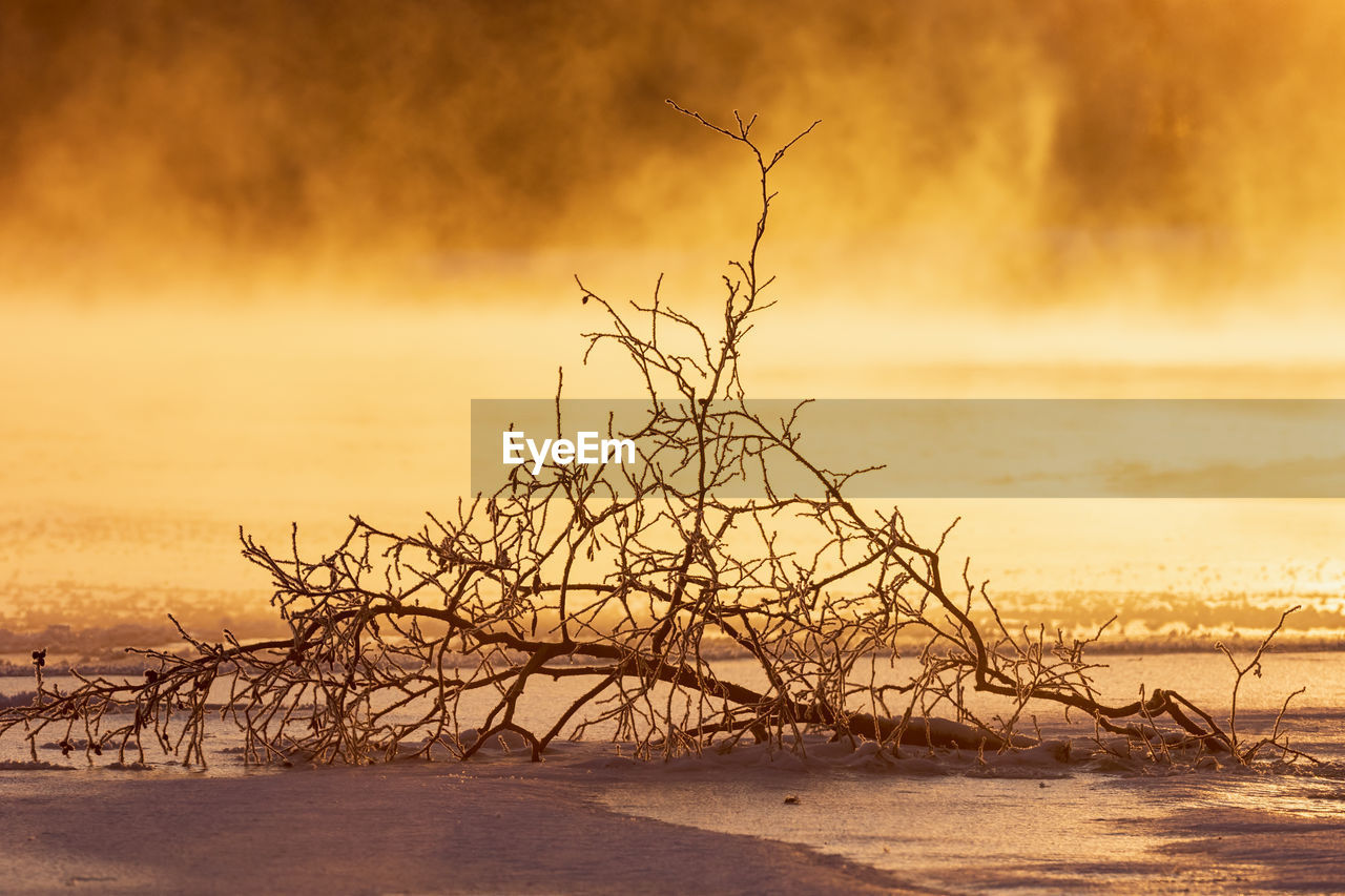 sky, bare tree, scenics - nature, beauty in nature, tranquility, sunset, tree, tranquil scene, nature, no people, snow, winter, environment, branch, cold temperature, orange color, non-urban scene, land, plant, outdoors, dead plant, isolated