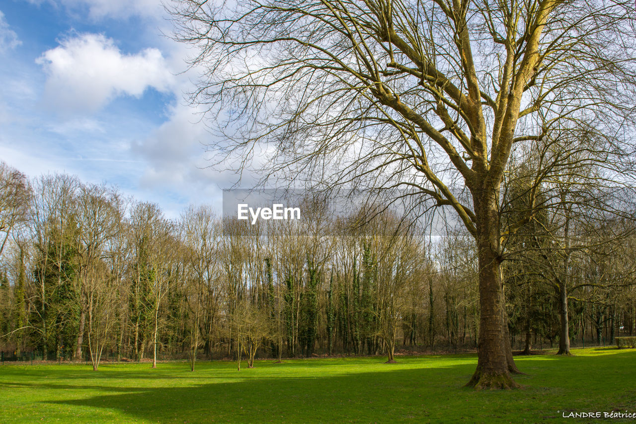 tree, bare tree, grass, green color, nature, beauty in nature, branch, tranquility, park - man made space, sky, tranquil scene, scenics, no people, outdoors, growth, day, landscape, tree trunk, golf course