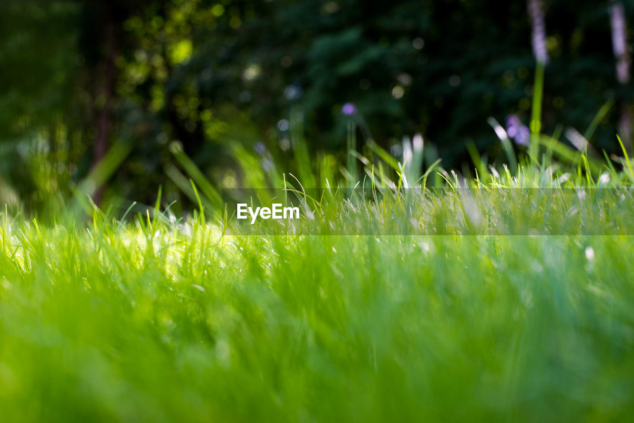 grass, growth, meadow, summer, nature, outdoors, no people