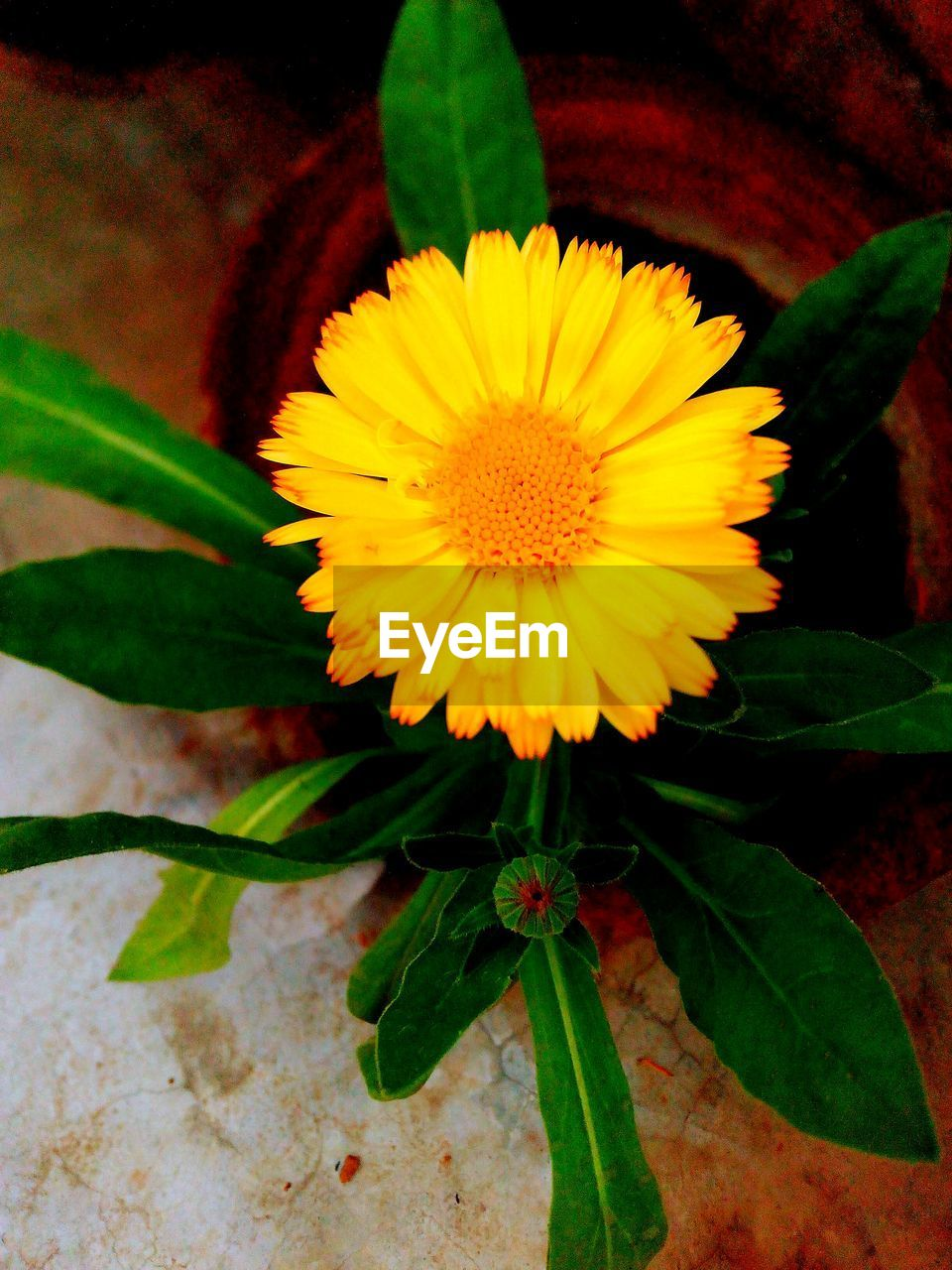 flower, petal, fragility, yellow, beauty in nature, growth, flower head, leaf, freshness, nature, plant, green color, no people, pollen, close-up, outdoors, day, sunflower, springtime, blooming