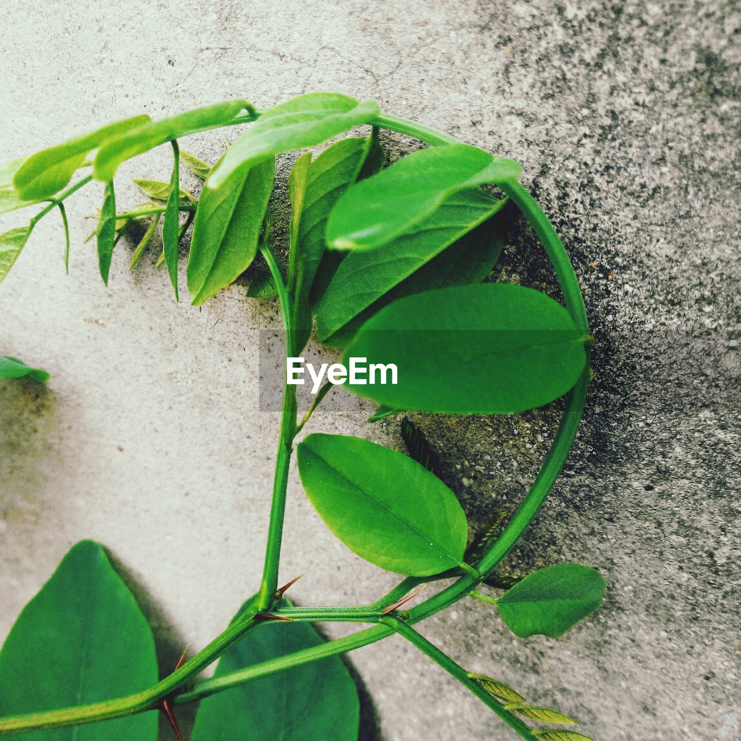leaf, green color, growth, plant, close-up, nature, growing, green, freshness, high angle view, potted plant, no people, day, outdoors, beauty in nature, cactus, leaf vein, stem, beginnings, sunlight