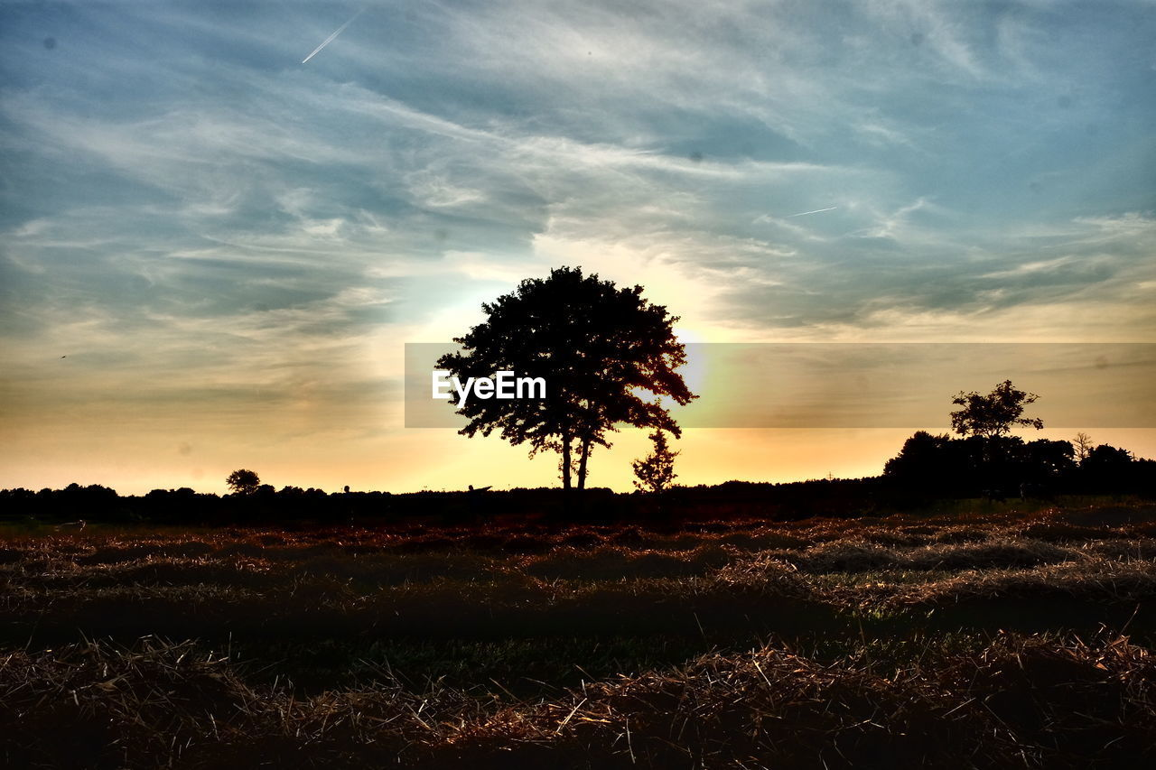 sunset, landscape, tree, beauty in nature, nature, tranquil scene, tranquility, scenics, field, sky, silhouette, outdoors, grass, no people, growth, lone, day
